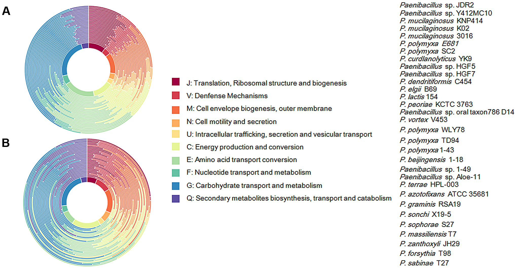 Functional classification of gene content of the 31 <i>Paenibacillus</i> strains.