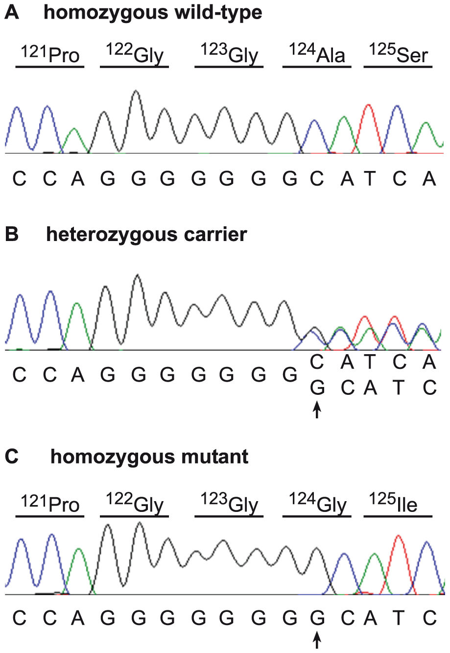 Mutation identification in the bovine <i>SUOX</i> gene.
