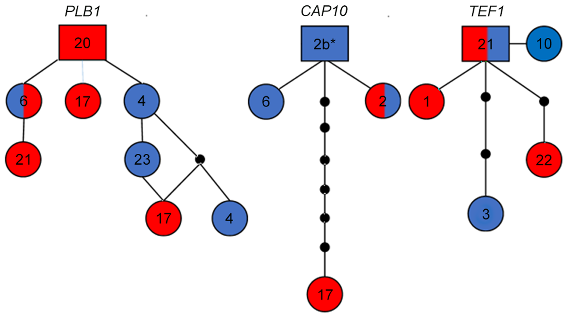 Haplotype network analysis suggests recent introgression between VGIIIa and VGIIIb.