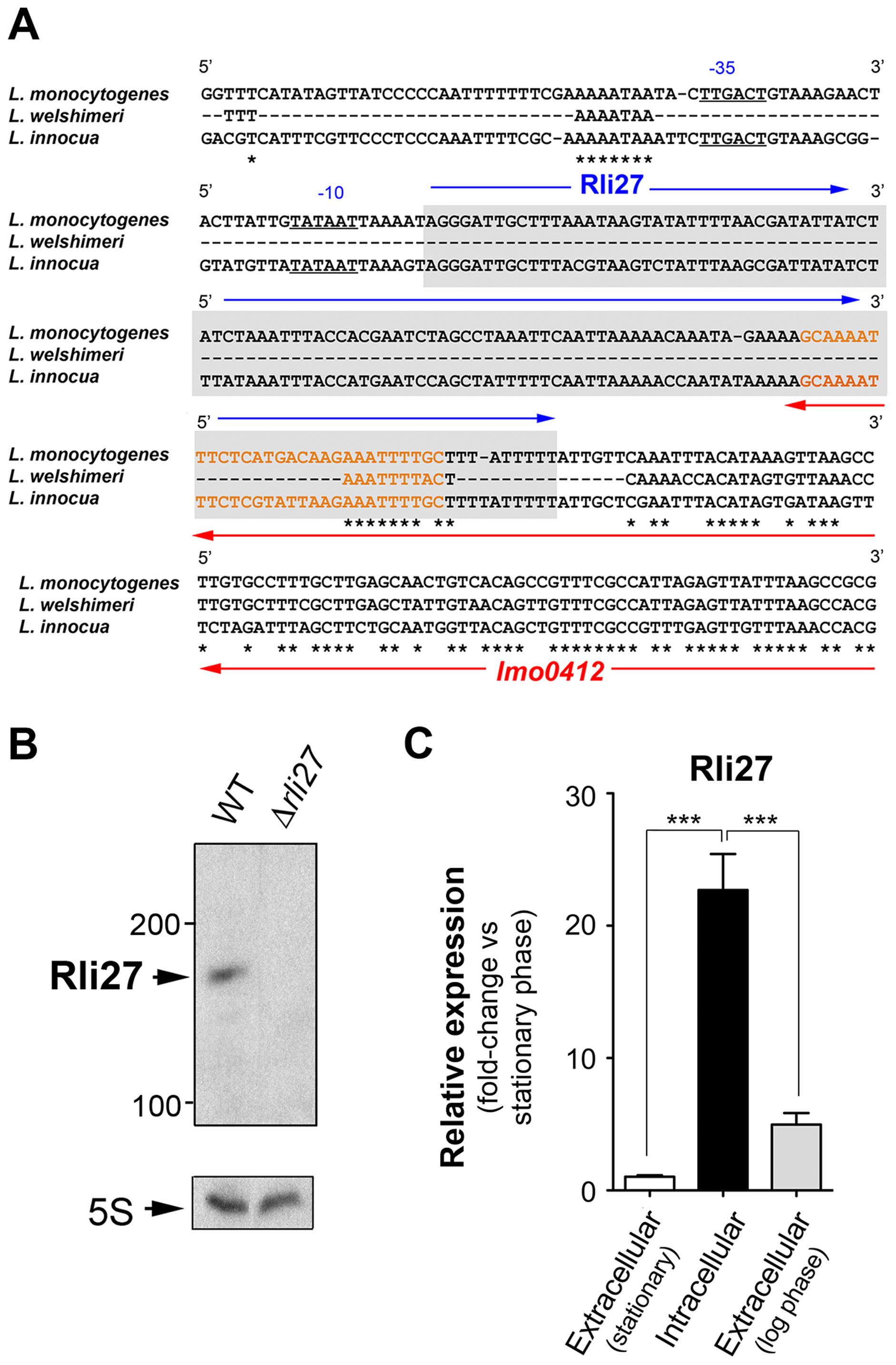 Rli27 is a bona fide <i>L. monocytogenes</i> sRNA induced by intracellular bacteria.