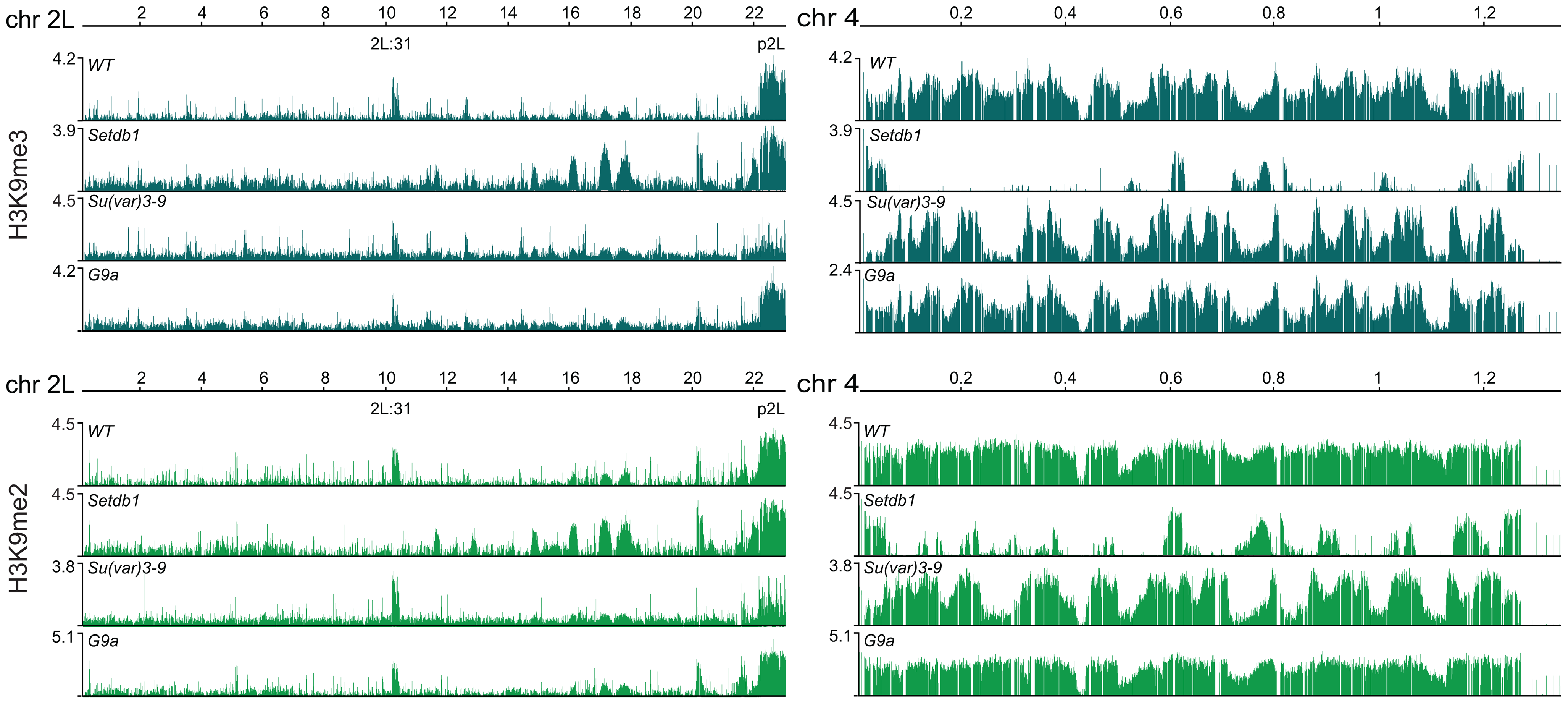 H3K9 methylation profiles in HKMT mutants.