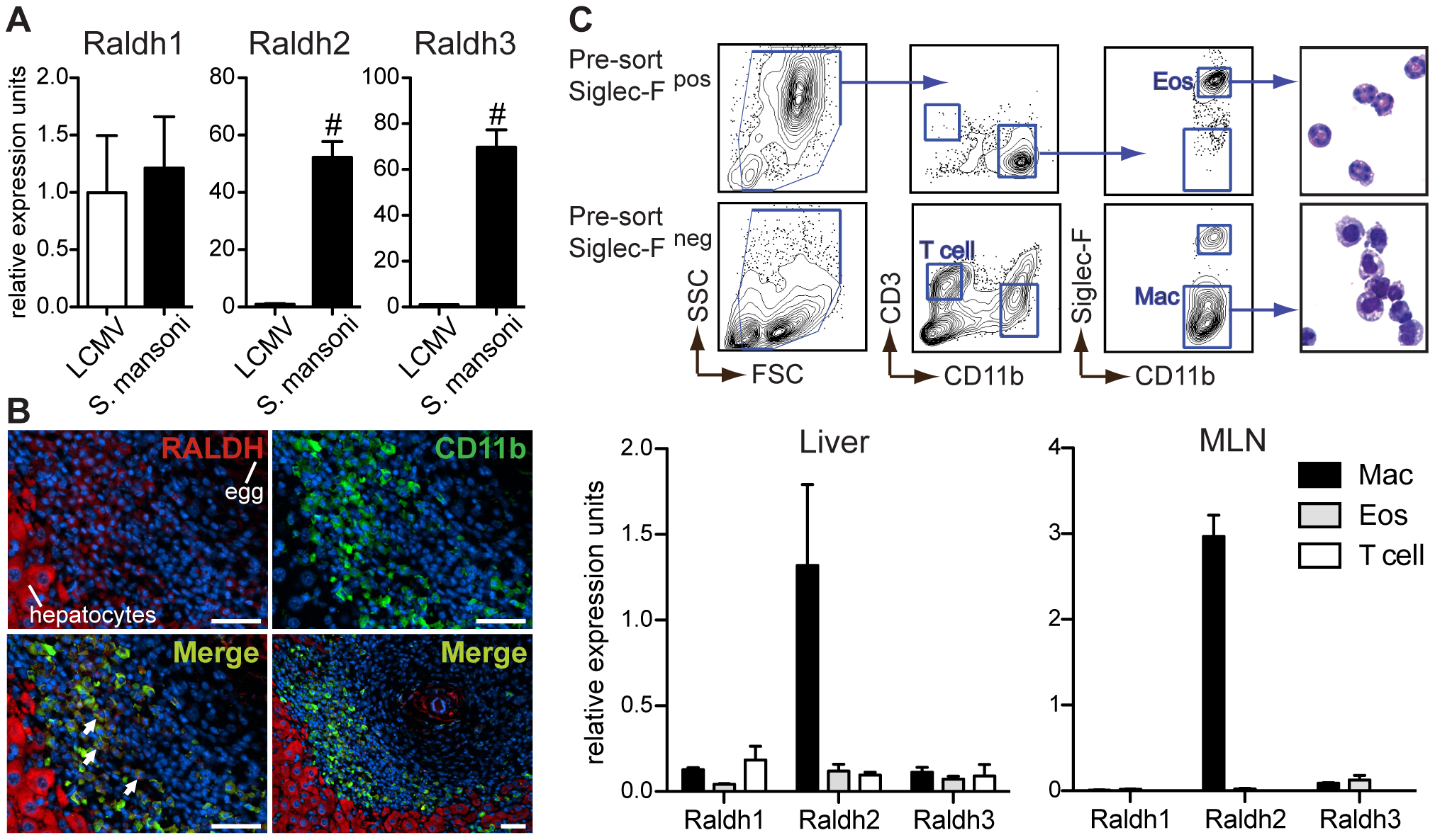 Type-2 inflammatory cells express Raldh2 and Raldh3, with Raldh2 most highly expressed in macrophages.