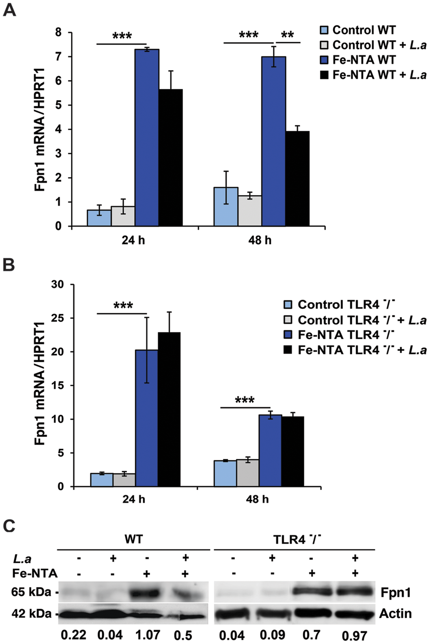 <i>L. amazonensis</i> infection inhibits Fpn1 expression in macrophages in a TLR4 dependent manner.