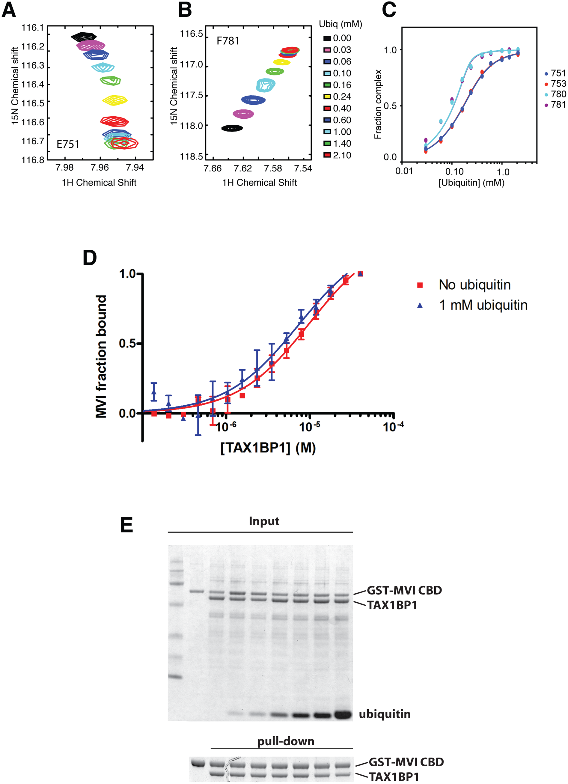 Binding of TAX1BP1 zinc finger domains to ubiquitin and myosin VI.