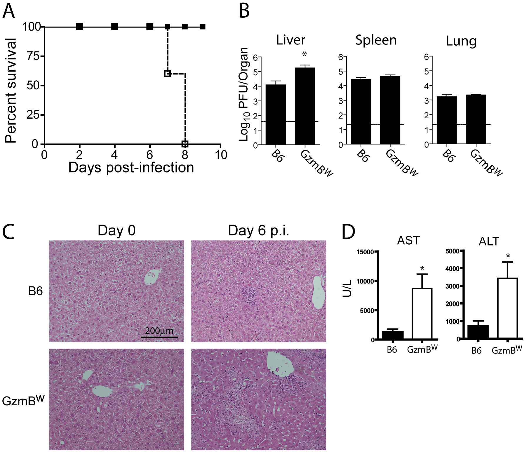 GzmB<sup>W/W</sup> mice are sensitive to infection with Δm157 MCMV.