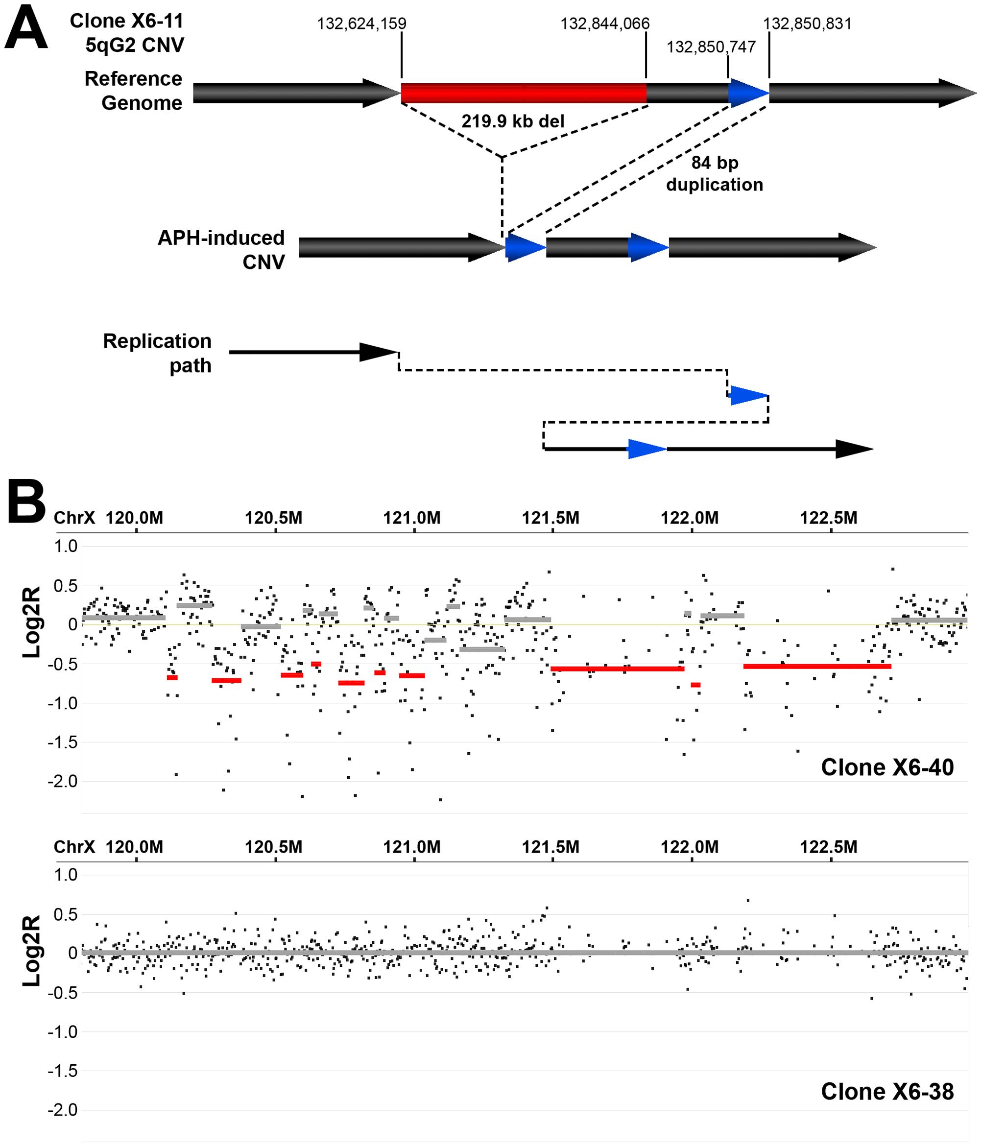Example of complex APH-induced <i>de novo</i> CNVs in mouse ES cells.