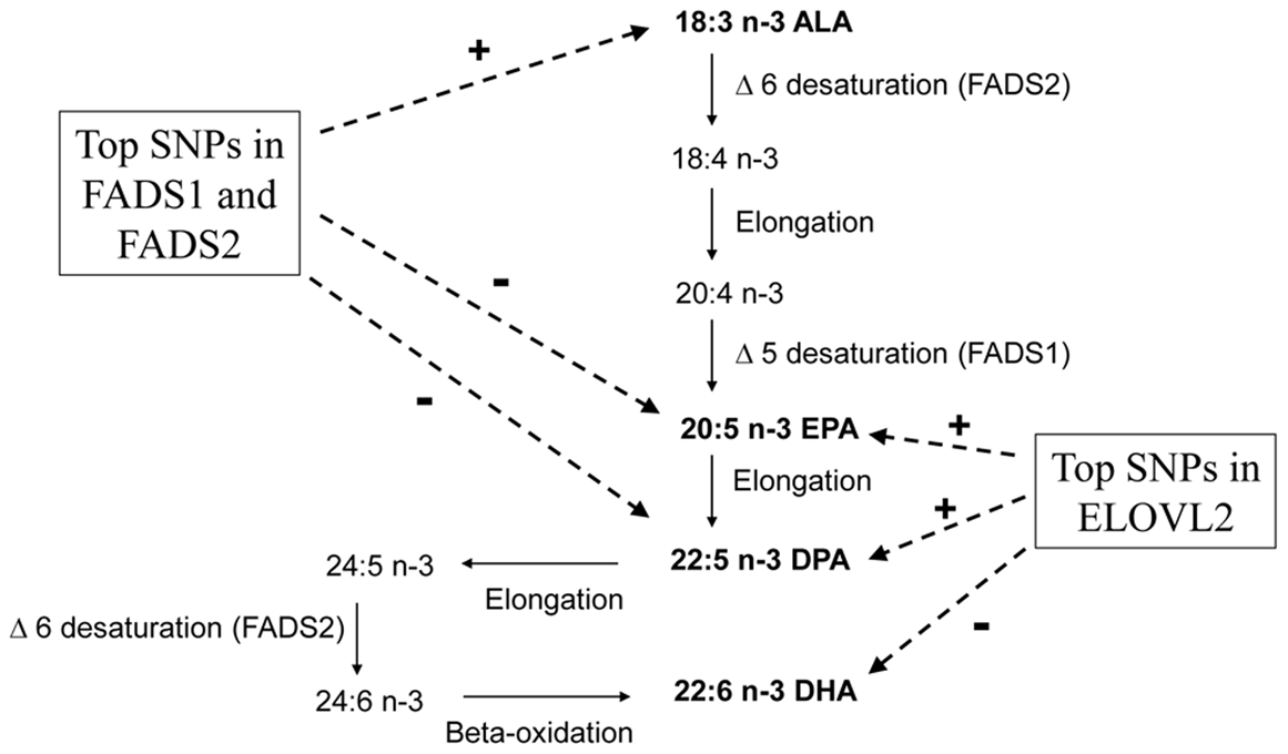 N-3 polyunsaturated fatty acid metabolic pathway and summary of genome-wide associations in pathway.