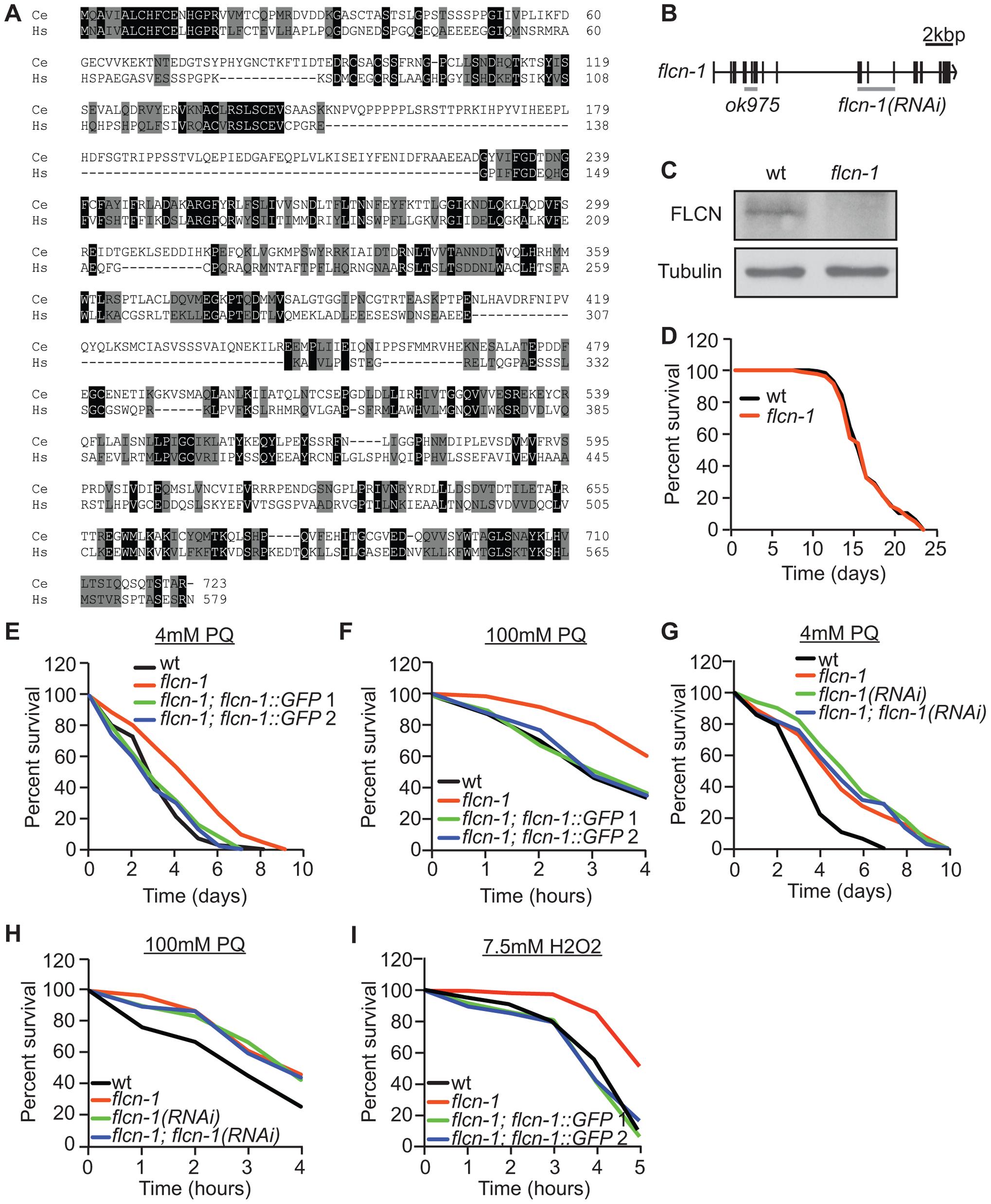 Loss of <i>flcn-1</i> confers resistance to oxidative stress in <i>C. elegans</i>.
