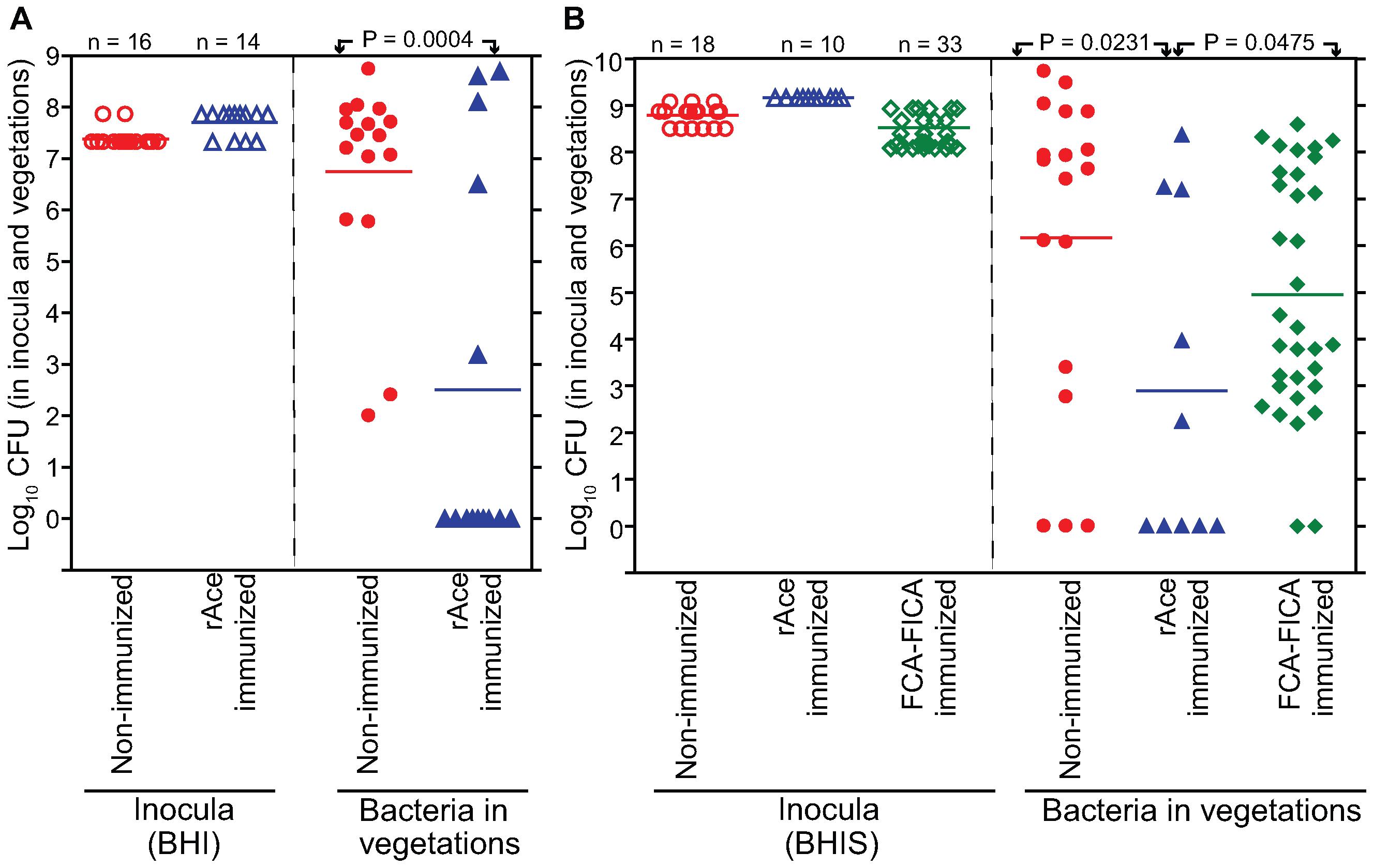 rAce active-immunization in rat endocarditis model.