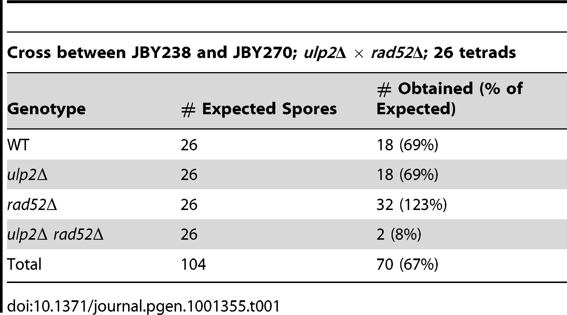 Genetic interactions between <i>ulp2</i>Δ and <i>rad52</i>Δ mutants.