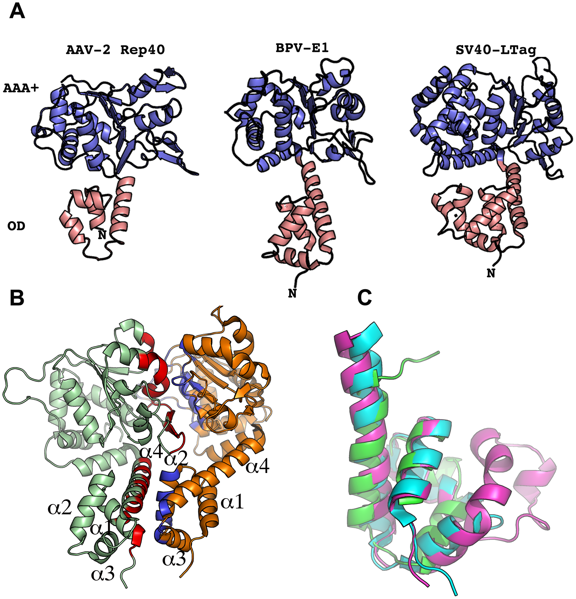 Structural comparison of SF3 helicase structures.