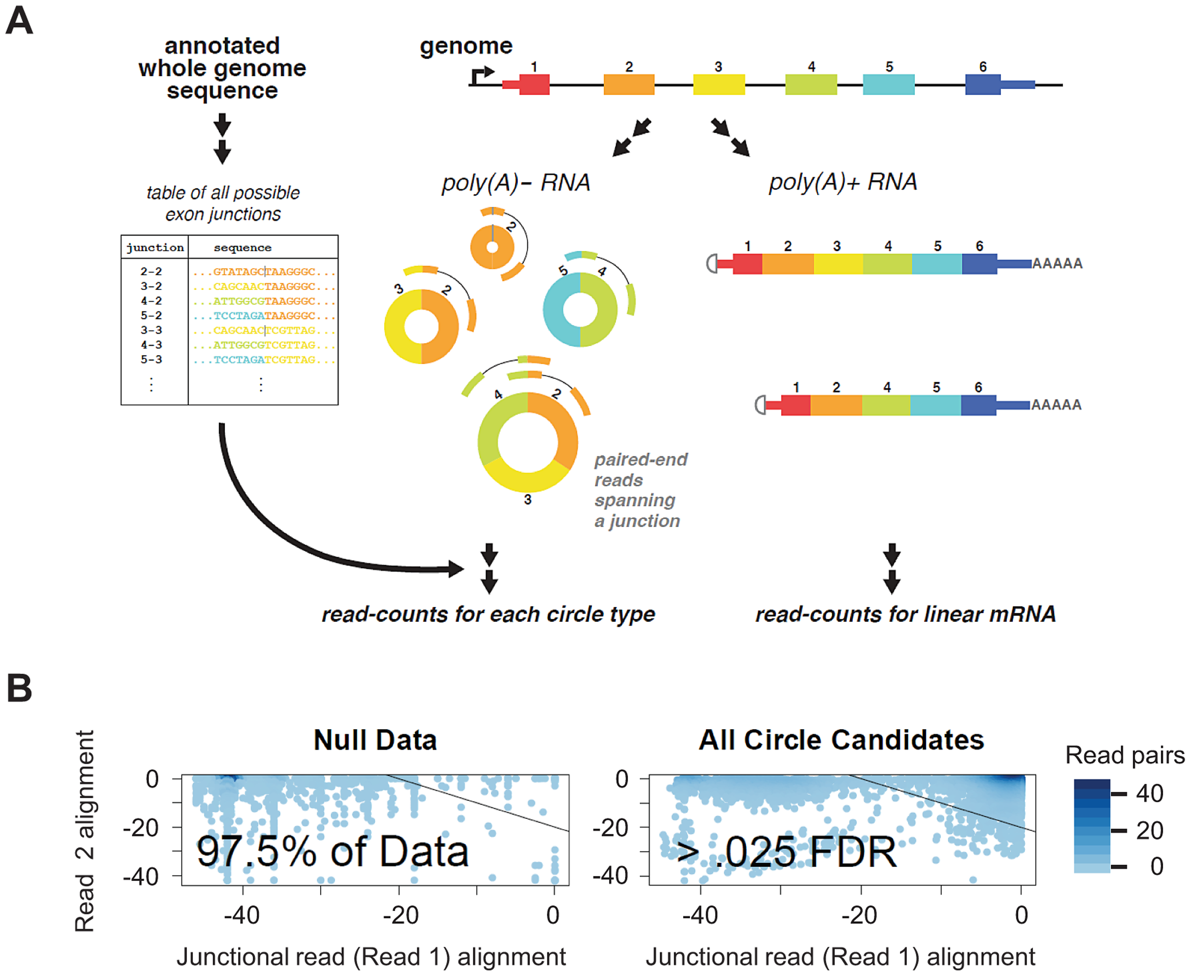 Bioinformatic and statistical method for detecting circular isoforms.
