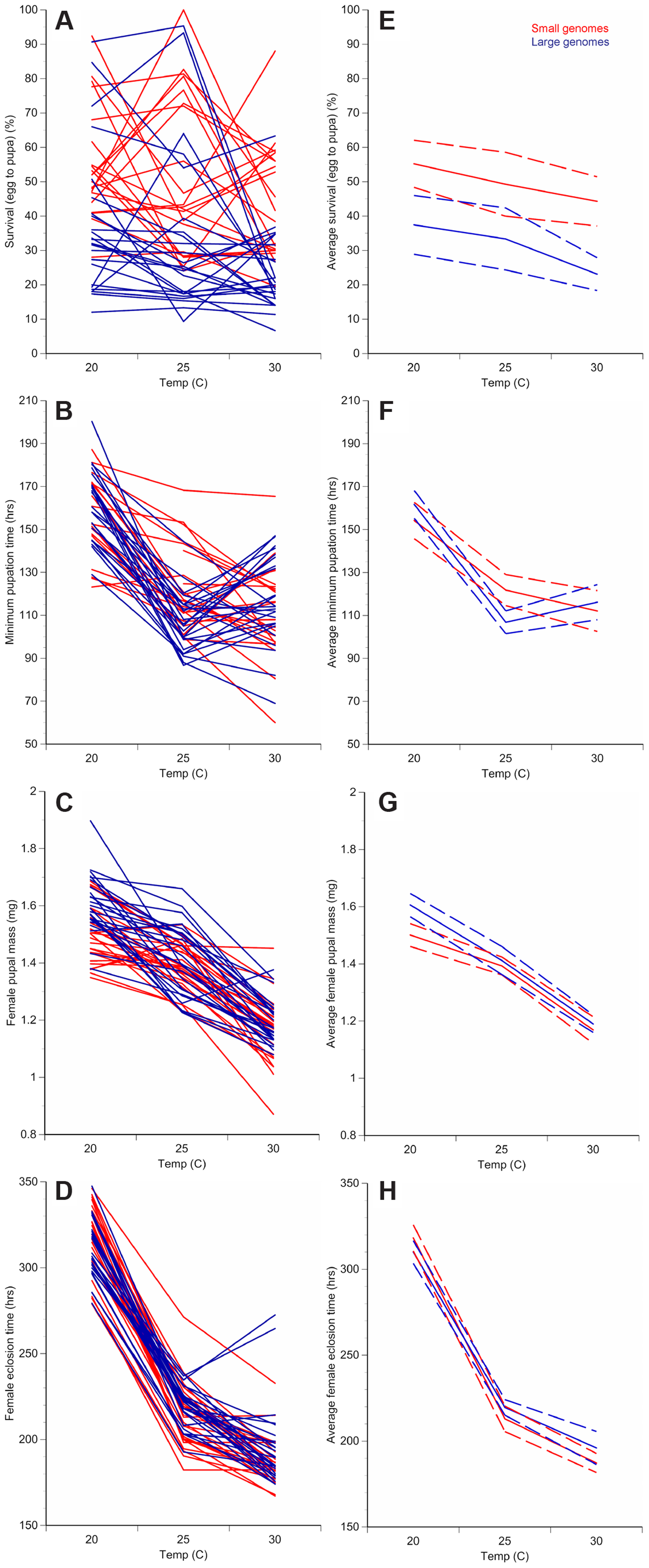 Changes in temperature alter development of <i>D. melanogaster</i> with small or large genomes.