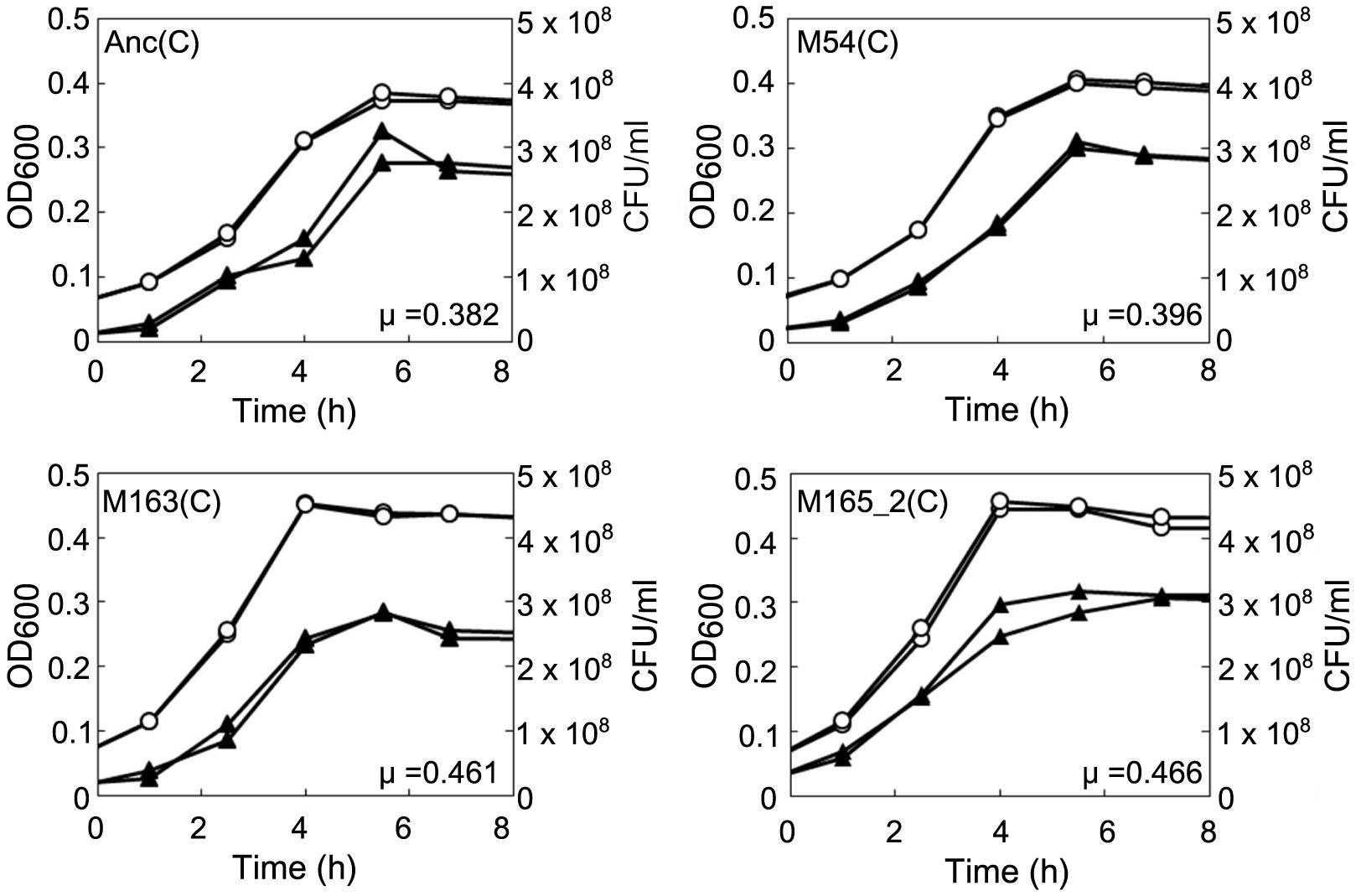 Growth curves of ancestral and evolved <i>E. coli</i>.