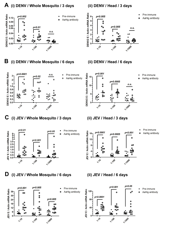 The role of <i>AaHig</i> in flaviviruses infection of <i>A</i>. <i>aegypti</i>.