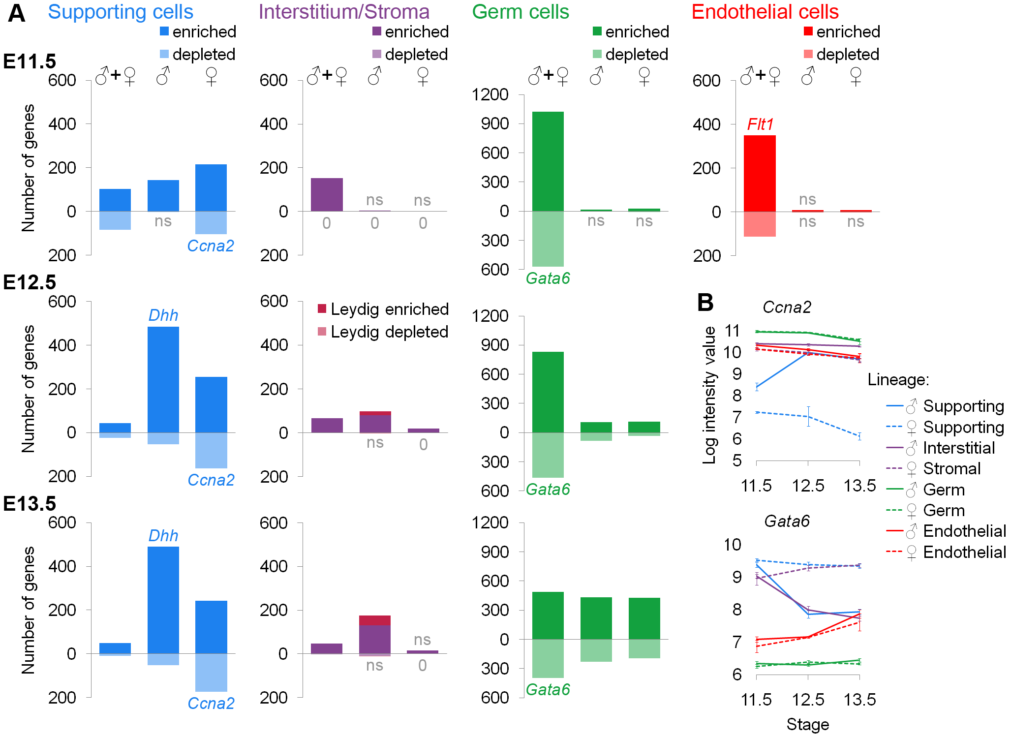 Lineage-specific enriched and depleted genes revealed distinct differentiation programs.