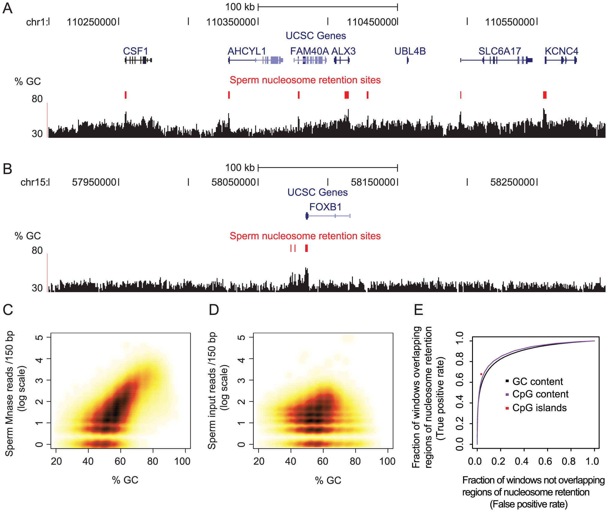 Base composition predicts sites of nucleosome retention in human sperm.