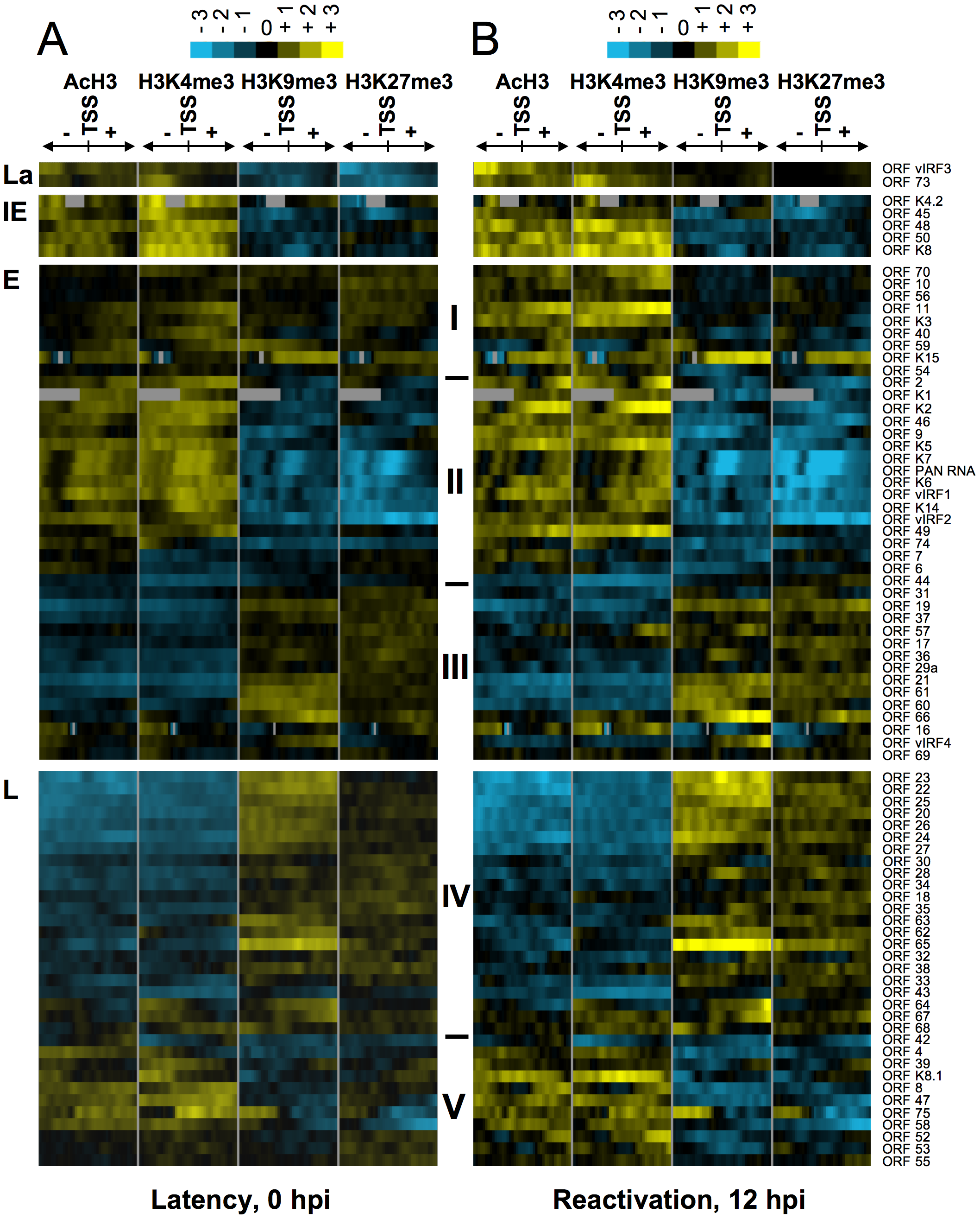 Hierarchical clustering of histone modifications associated with the regulatory regions of viral genes.