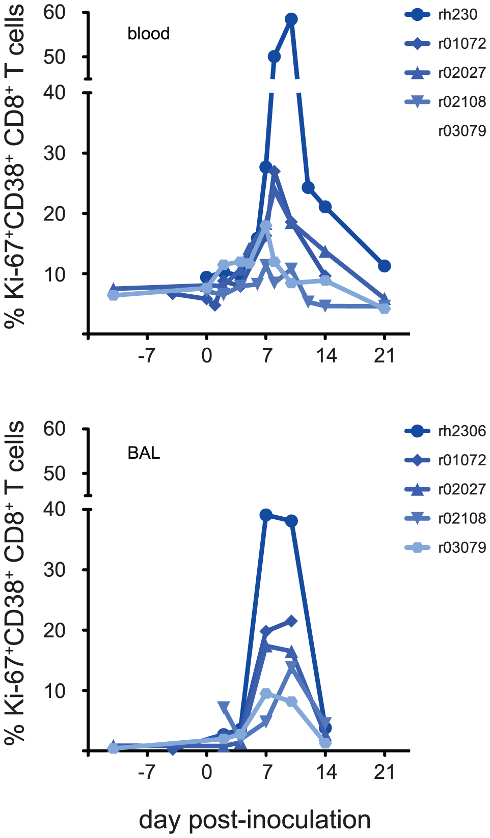 Activated CD8+ T cells appear in blood and lung within 7 days of inoculation with seasonal influenza virus K173.