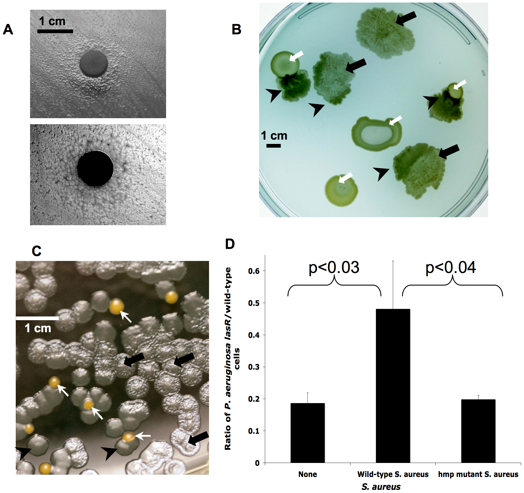 <i>lasR</i> mutant <i>P. aeruginosa</i> growth is altered during co-culture with <i>S. aureus</i>, apparently due to detoxification of NO·.