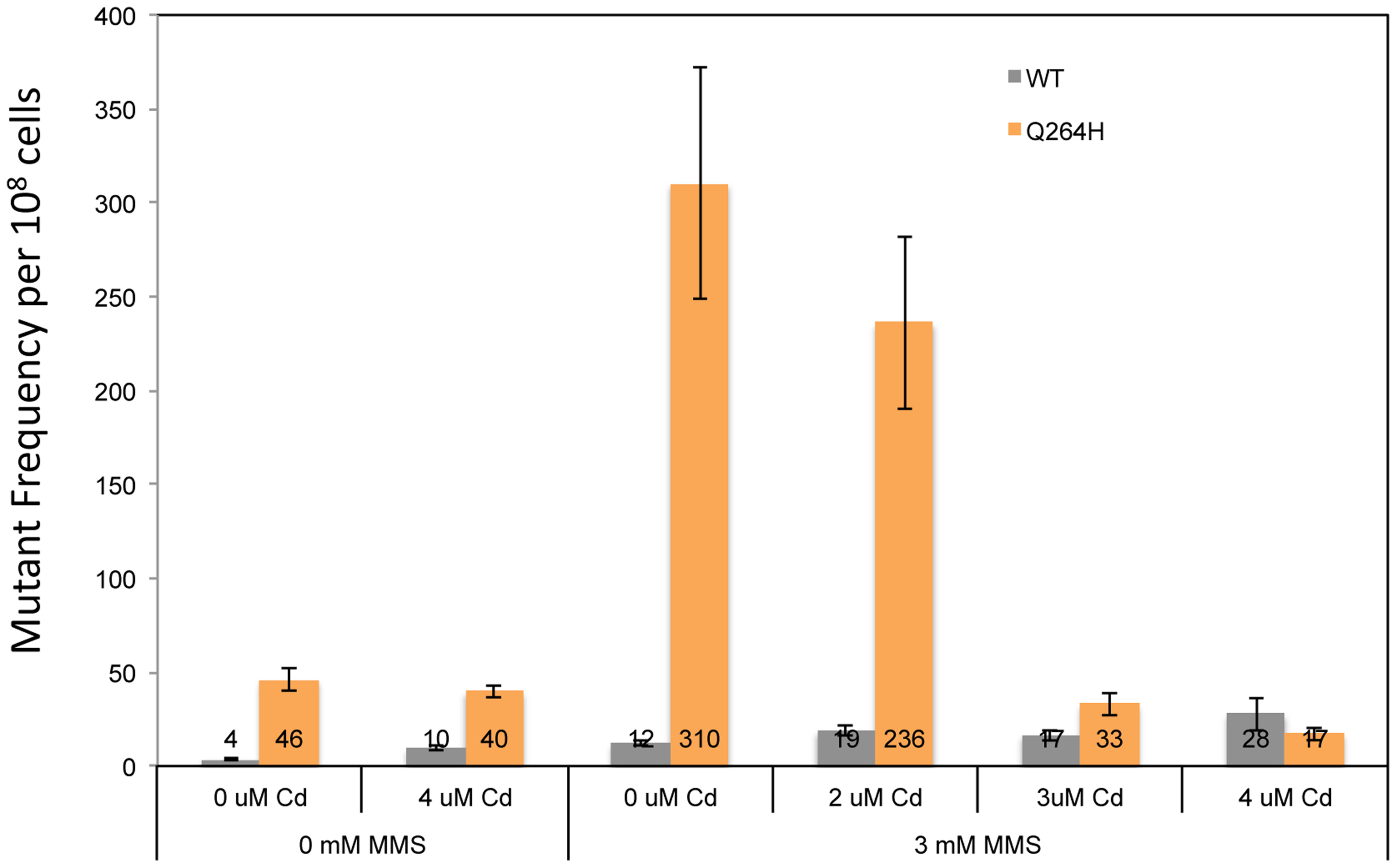 Exposure to CdCl<sub>2</sub> suppressed the MMS-induced increase in MtDNA mutant frequency.