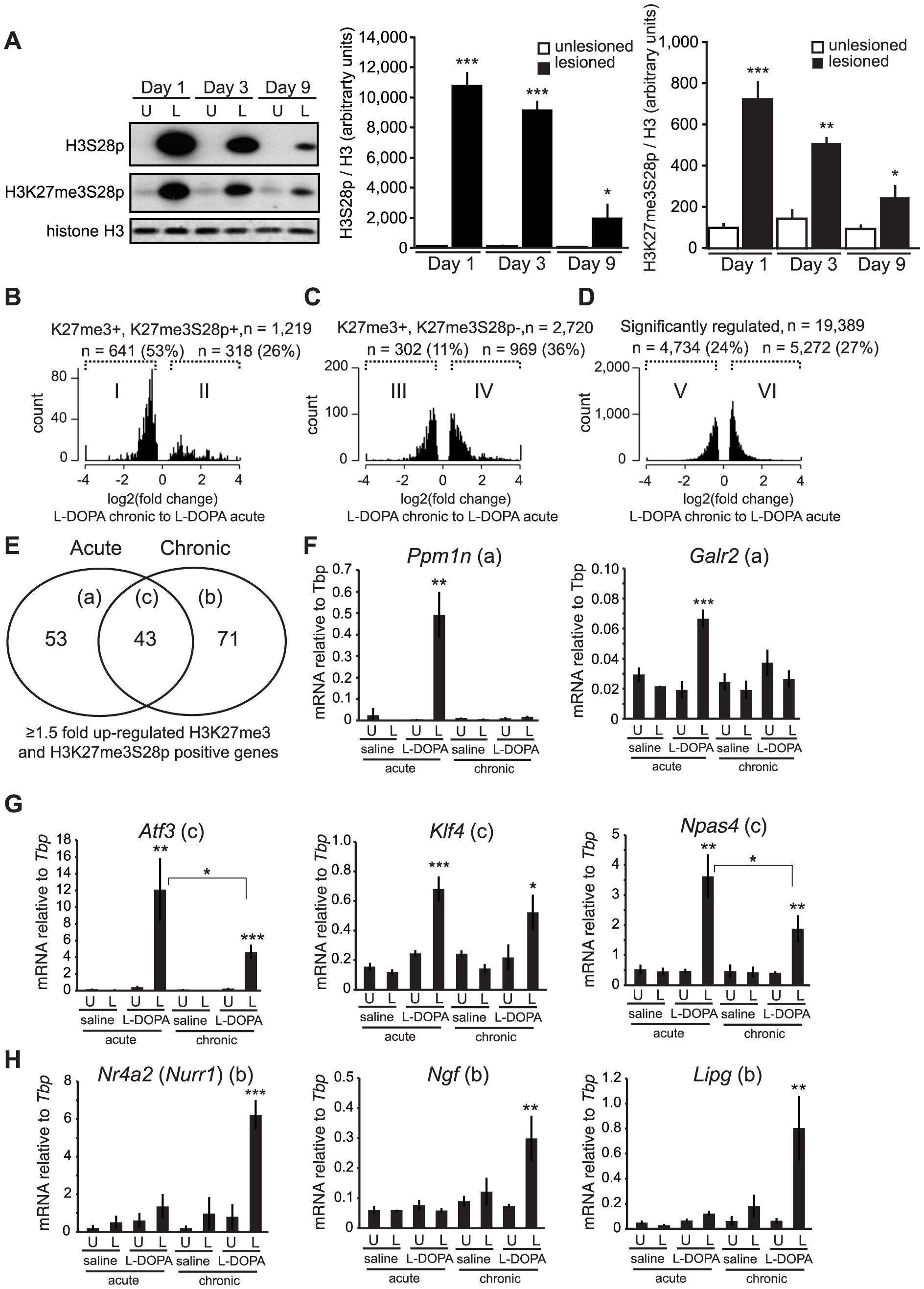 Chronic administration of L-DOPA decreases the induction of H3K27me3S28p and alters the transcriptomal response to L-DOPA.