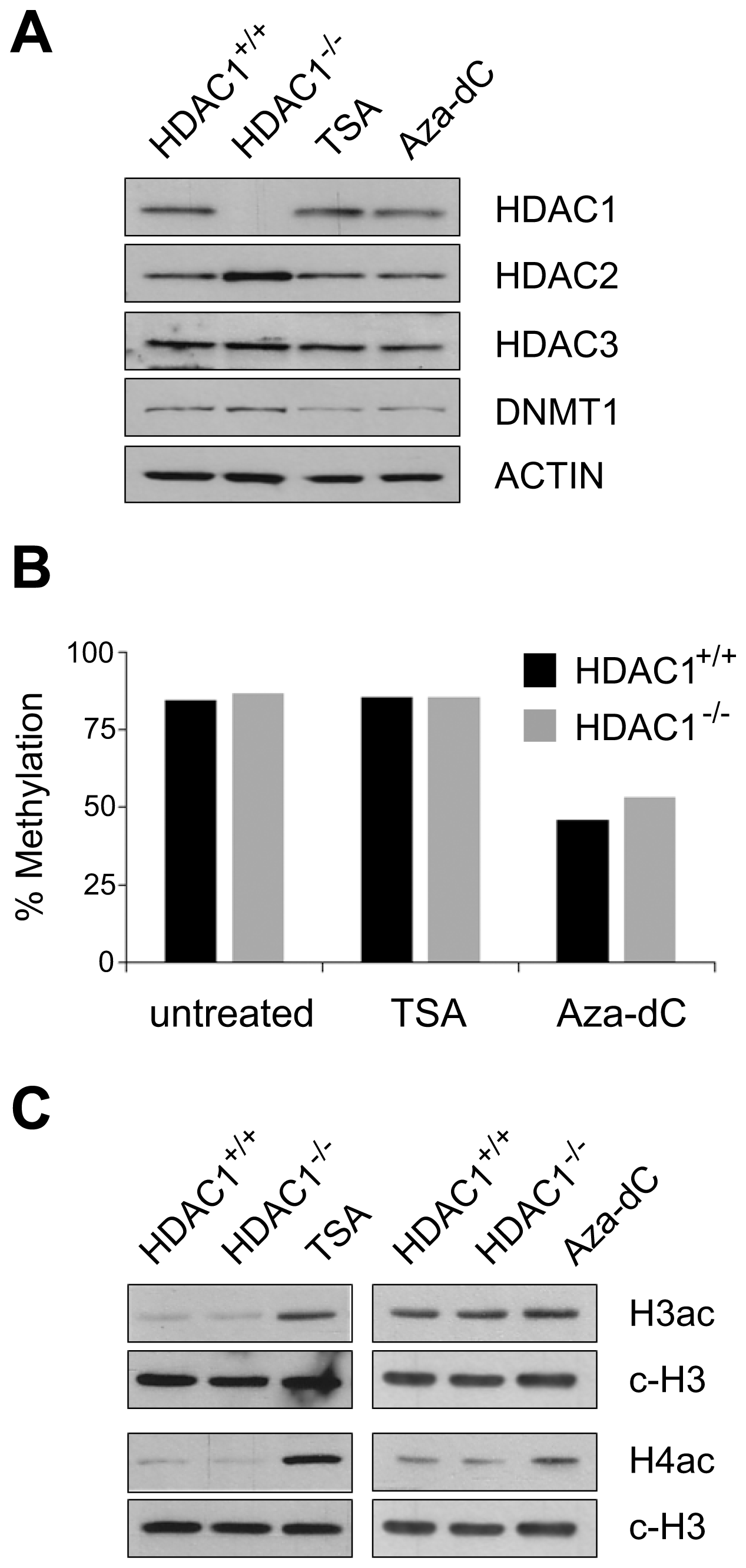 Effects of HDAC1 depletion, TSA treatment, and Aza-dC treatment on DNA–methylation and histone acetylation patterns in mouse fibroblasts.