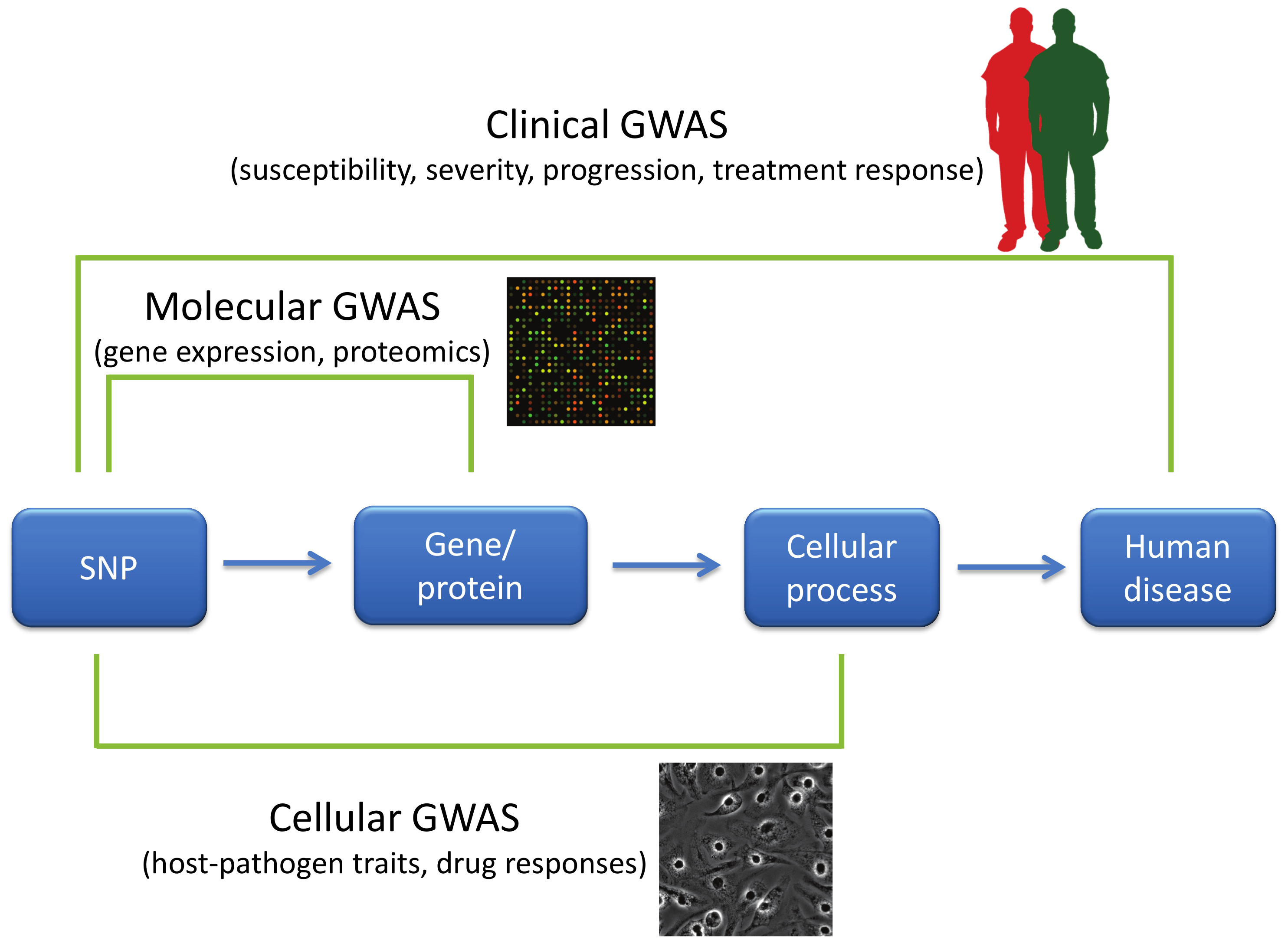 GWAS of varying phenotypic scales.