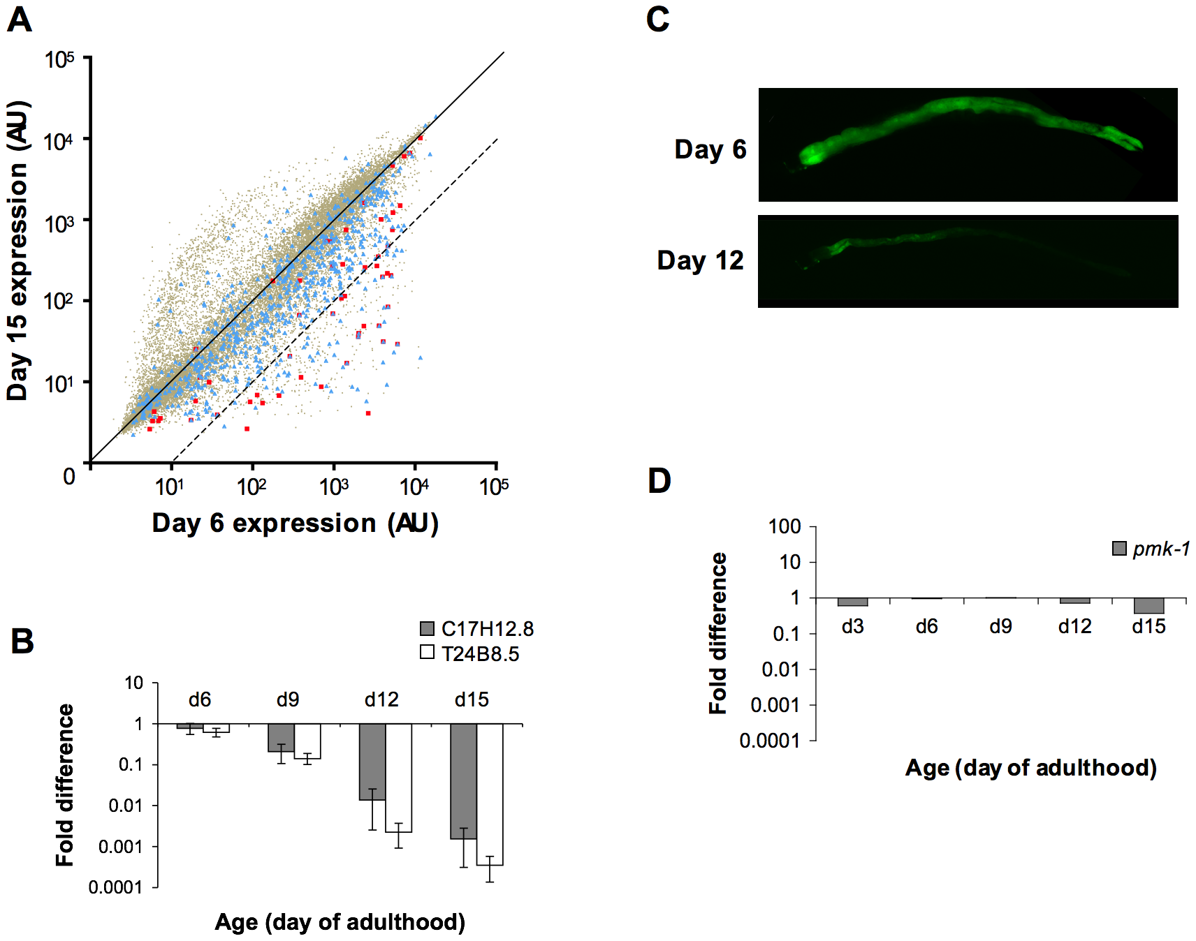A decline in expression of PMK-1 transcriptional targets during aging in the <i>C. elegans</i> intestine.