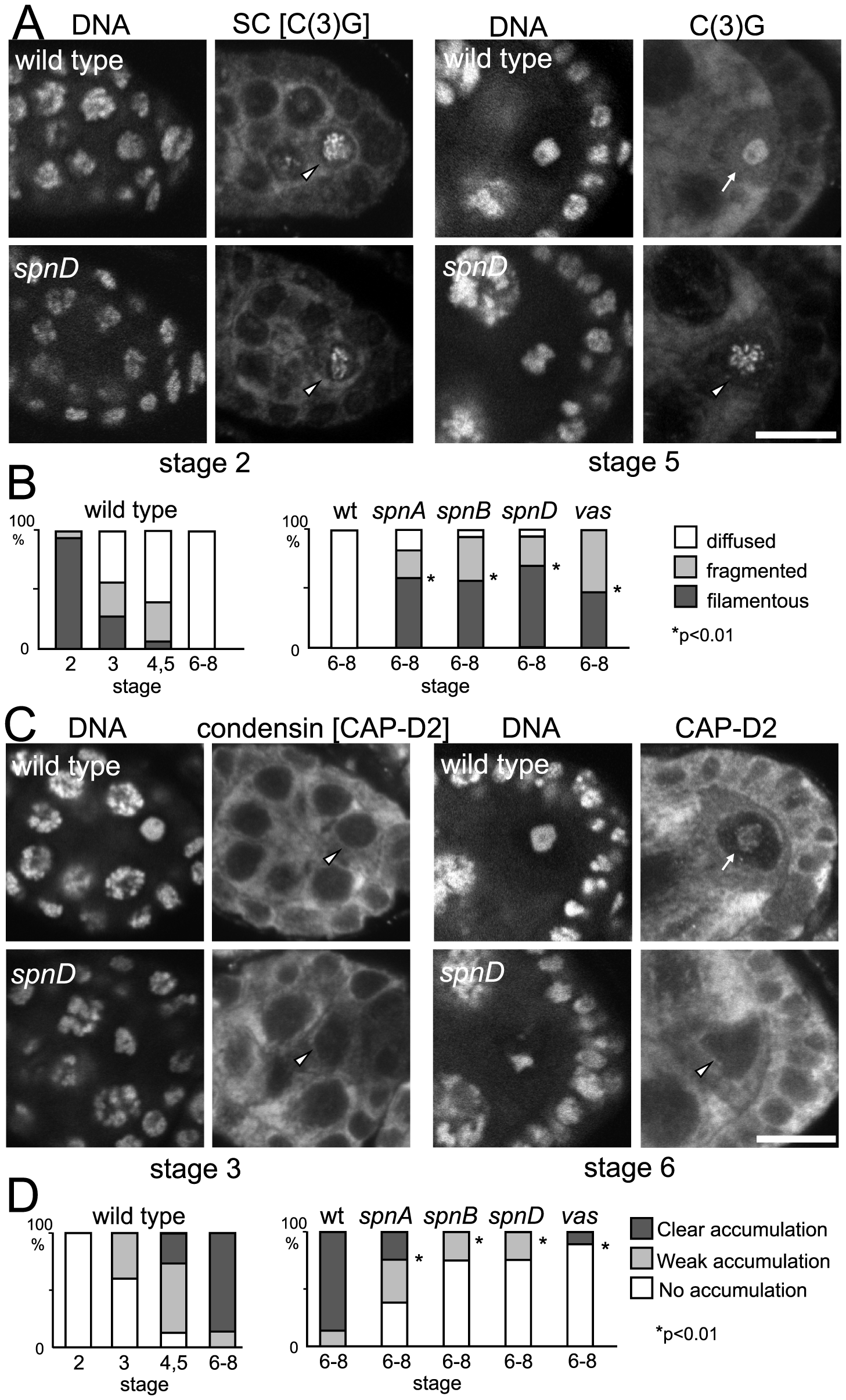 Disassembly of the synaptonemal complex and loading of the condensin complex is delayed by meiotic checkpoint activation.