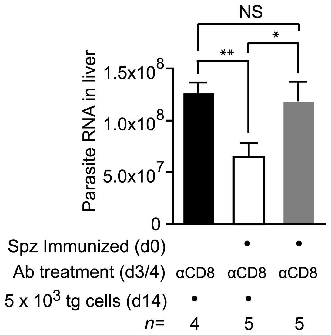 Cells primed weeks after immunization can inhibit parasite development.