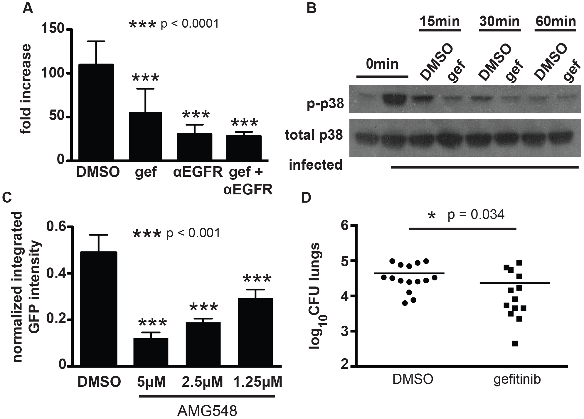 EGFR is important for mycobacterial infection of macrophages and in a mouse model of infection.