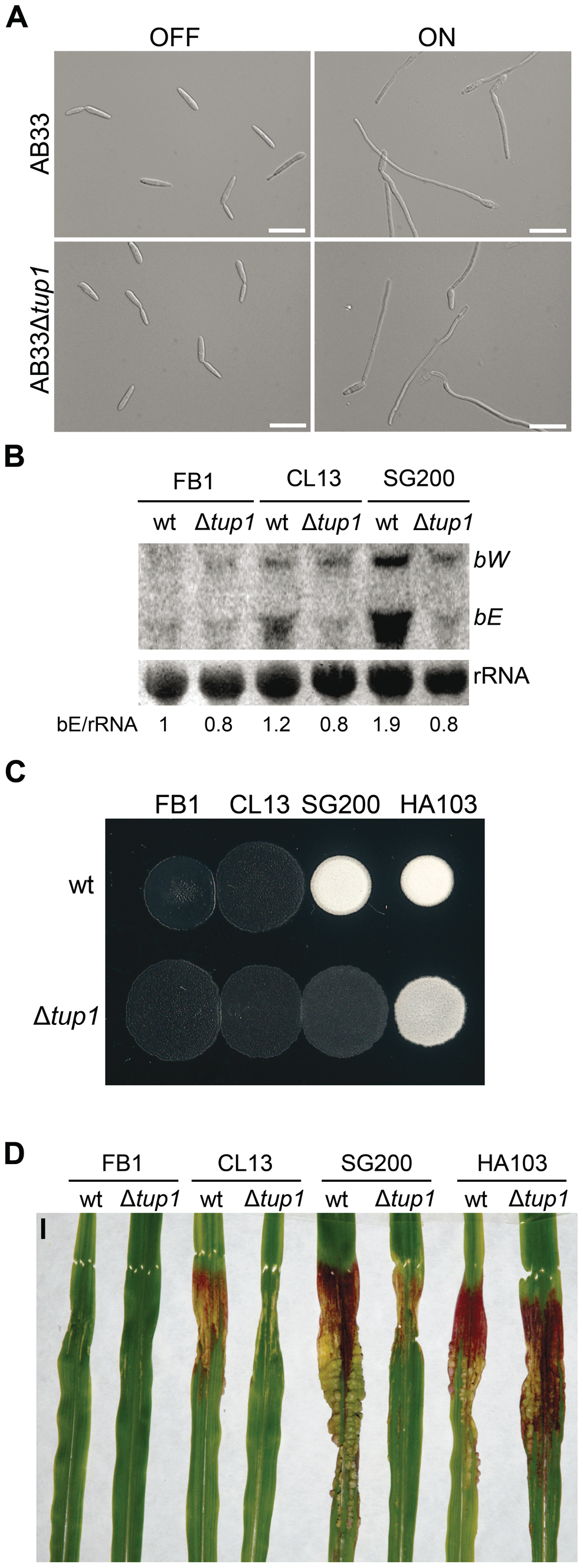 Genetic interaction between <i>tup1</i> and the <i>b</i> mating-type locus.