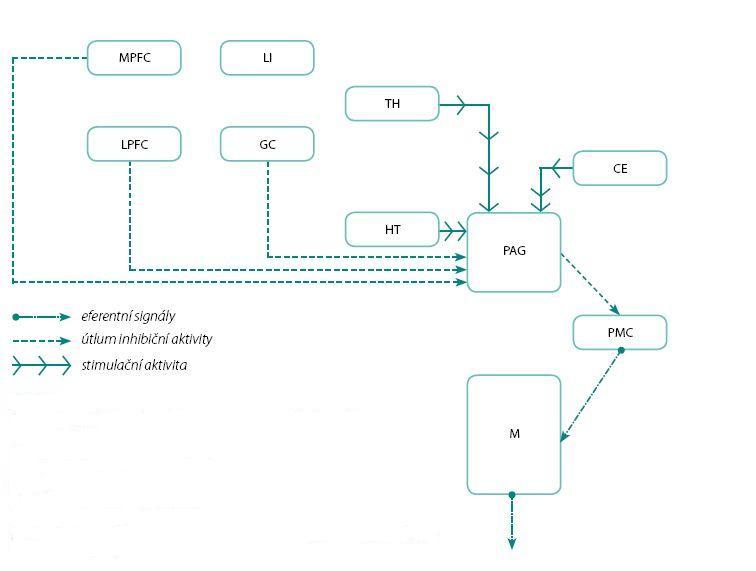 Obr. 3. Schéma centrální regulace během mikční fáze mikčního cyklu Fig. 3. Scheme of central regulation during voiding phase of the micturition cyclus