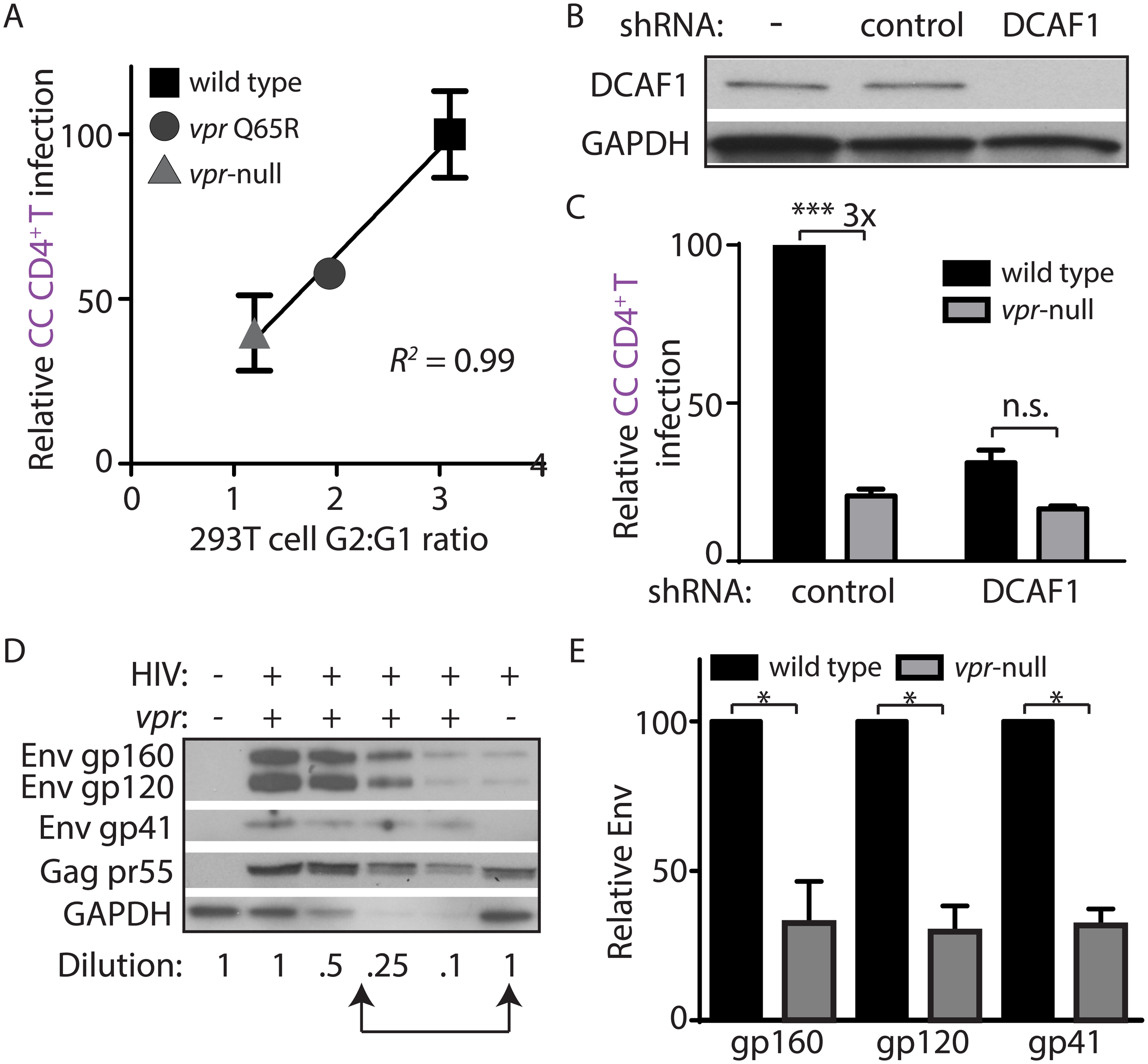 DCAF1 is required for Vpr-dependent HIV-1 spread from macrophages to CD4<sup>+</sup> T lymphocytes.