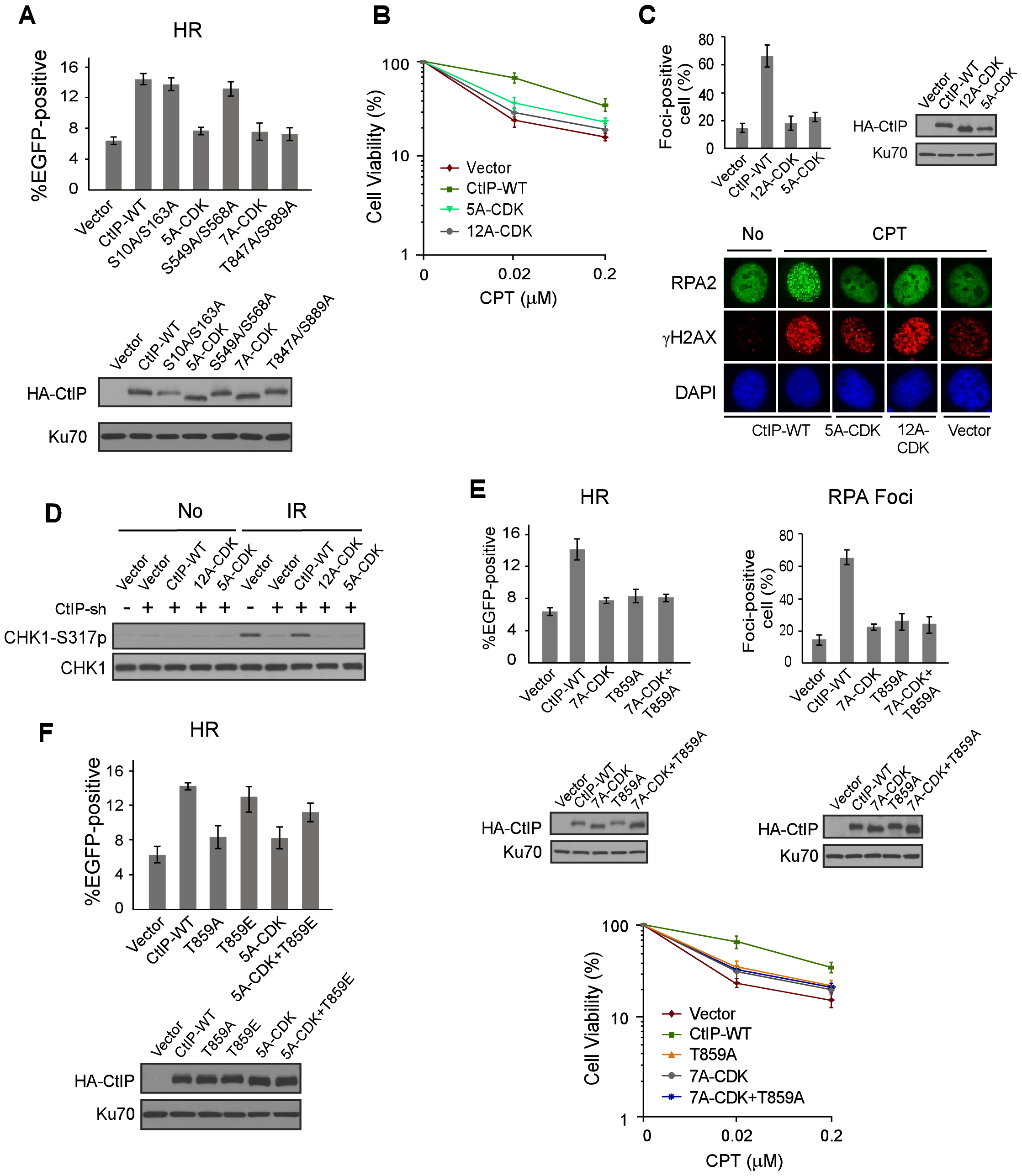 ATM-mediated phosphorylation of CtIP is important for end resection in a CDK-dependent manner.
