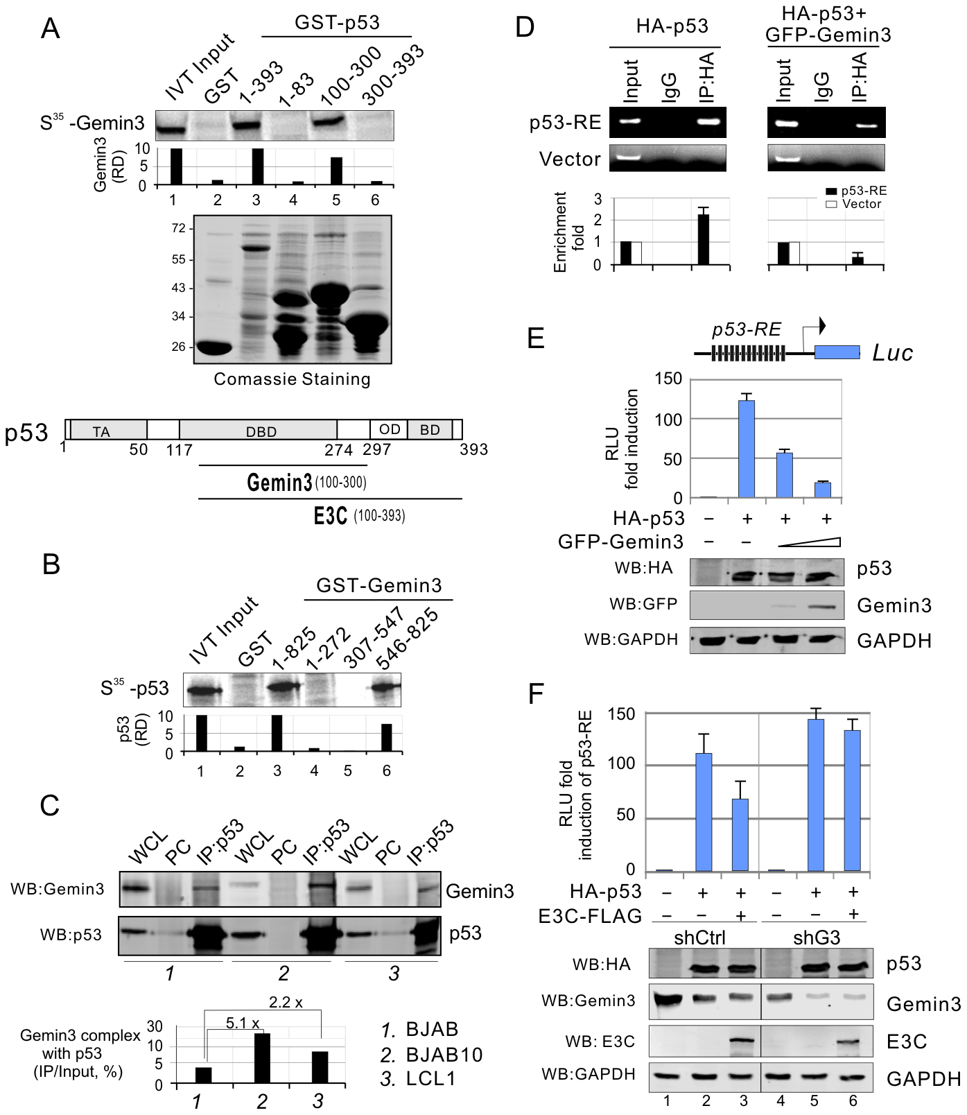Gemin3 interacts with p53 and contributes to EBNA3C-mediated inhibition of p53 transcriptional activity.