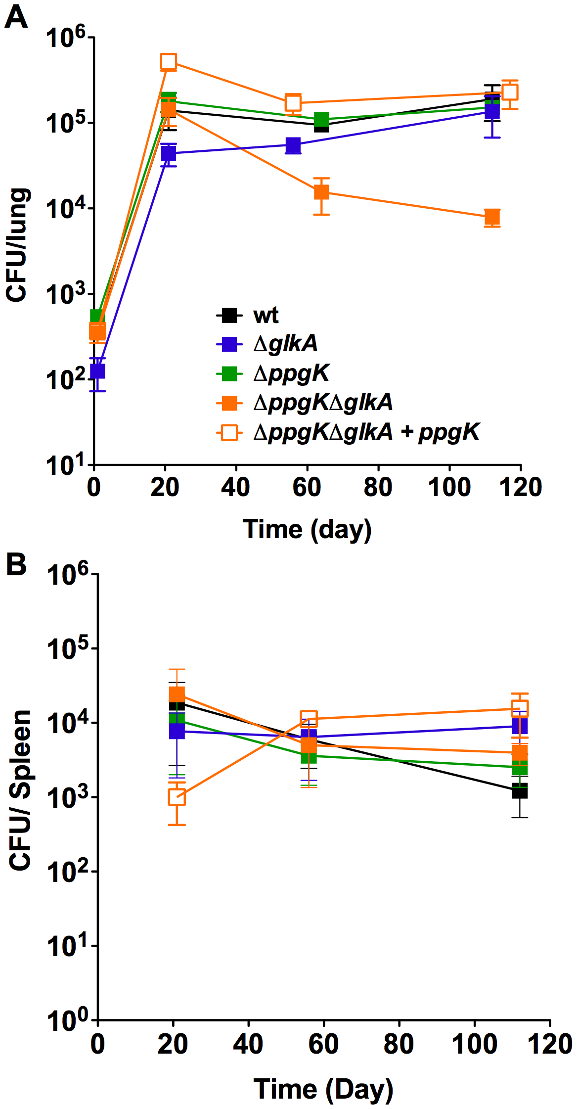 Glucose phosphorylation is required for mycobacterial persistence in lungs of chronically infected mice.