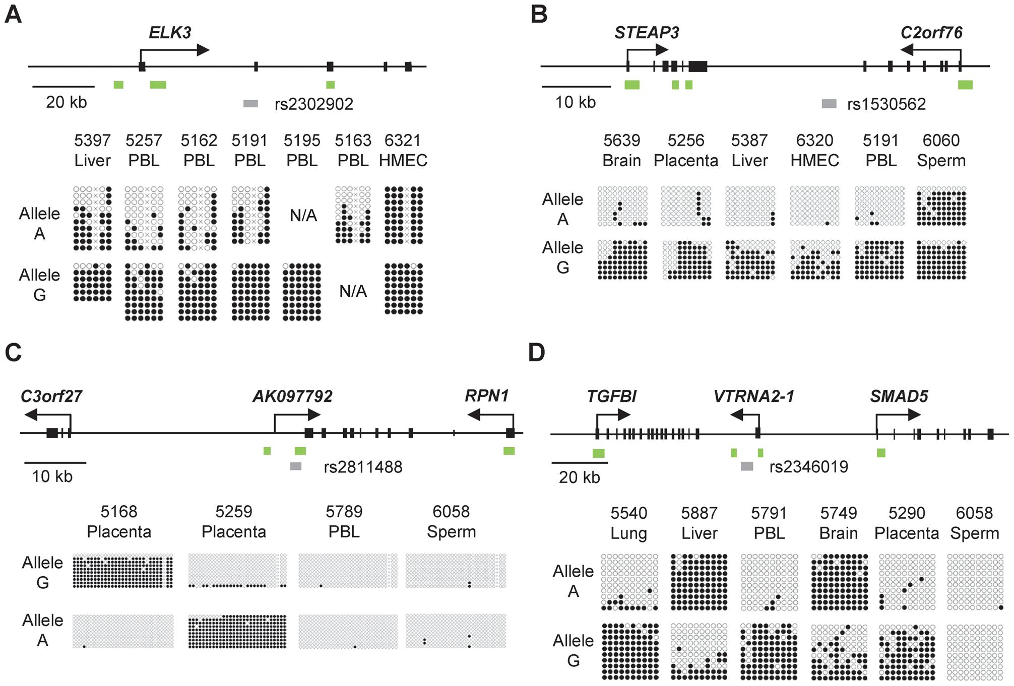 Bis-seq showing strong ASM in the <i>ELK3</i>, <i>STEAP3-C2orf76</i>, <i>C3orf27-RPN1</i>, and <i>VTRNA2-1</i> index regions.