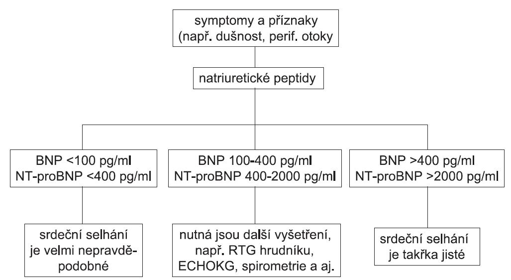 Algoritmus diagnostického využití plazmatických koncentrací natriuretických peptidů BNP a NT-proBNP u dosud neléčených nemocných, kteří mají symptomy a příznaky vzbuzující podezření na srdeční selhání (podle 13) BNP – natriuretický peptid typu B (brain natriuretic peptide), NT-proBNP – N-terminální konec prohormonu BNP, ECHOKG – echokardiografie