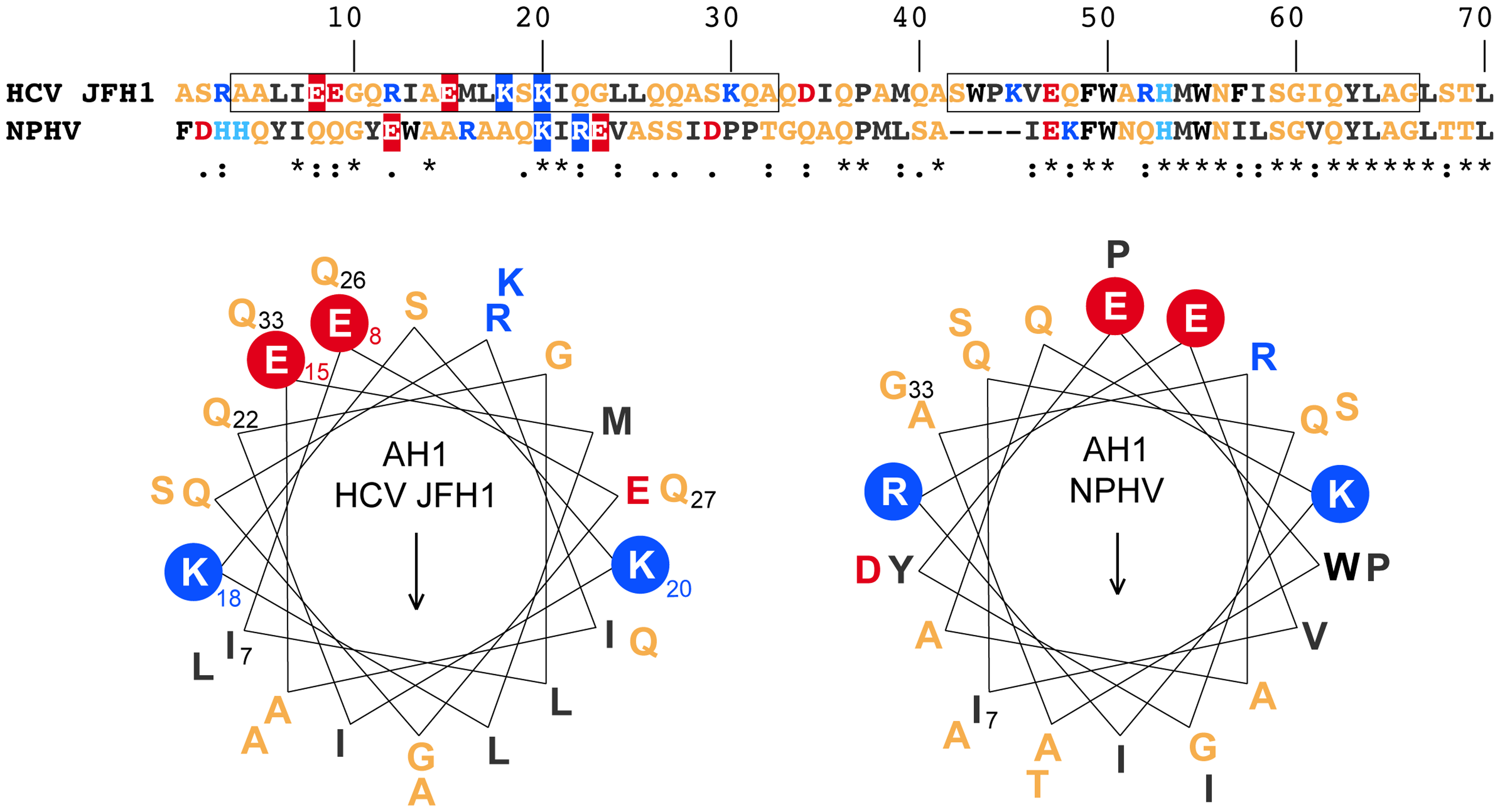 NS4B AH1 is structurally conserved among phylogenetically distant hepaciviruses.