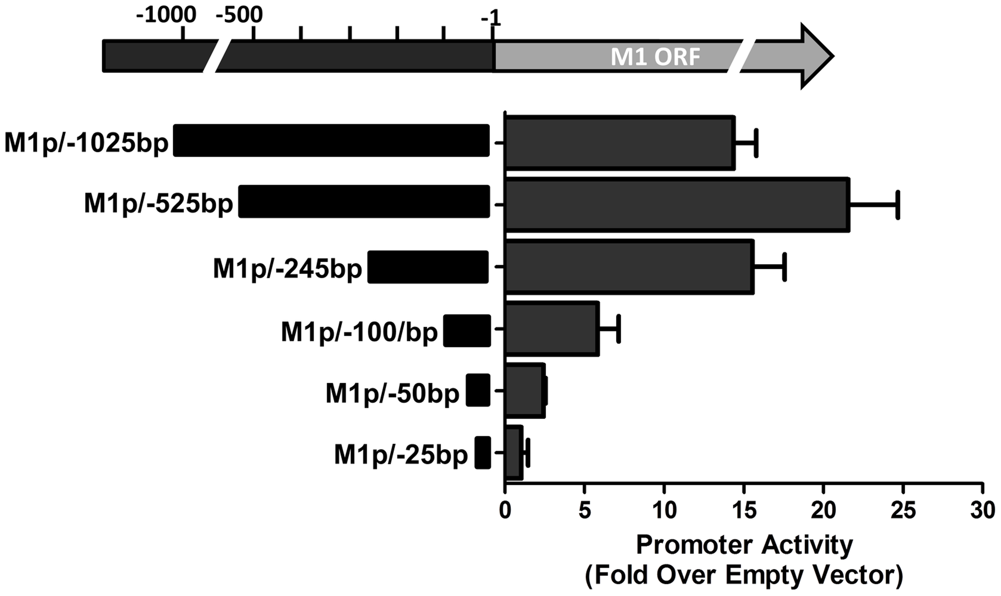 M1 promoter exhibits basal activity in a plasmablast cell line.
