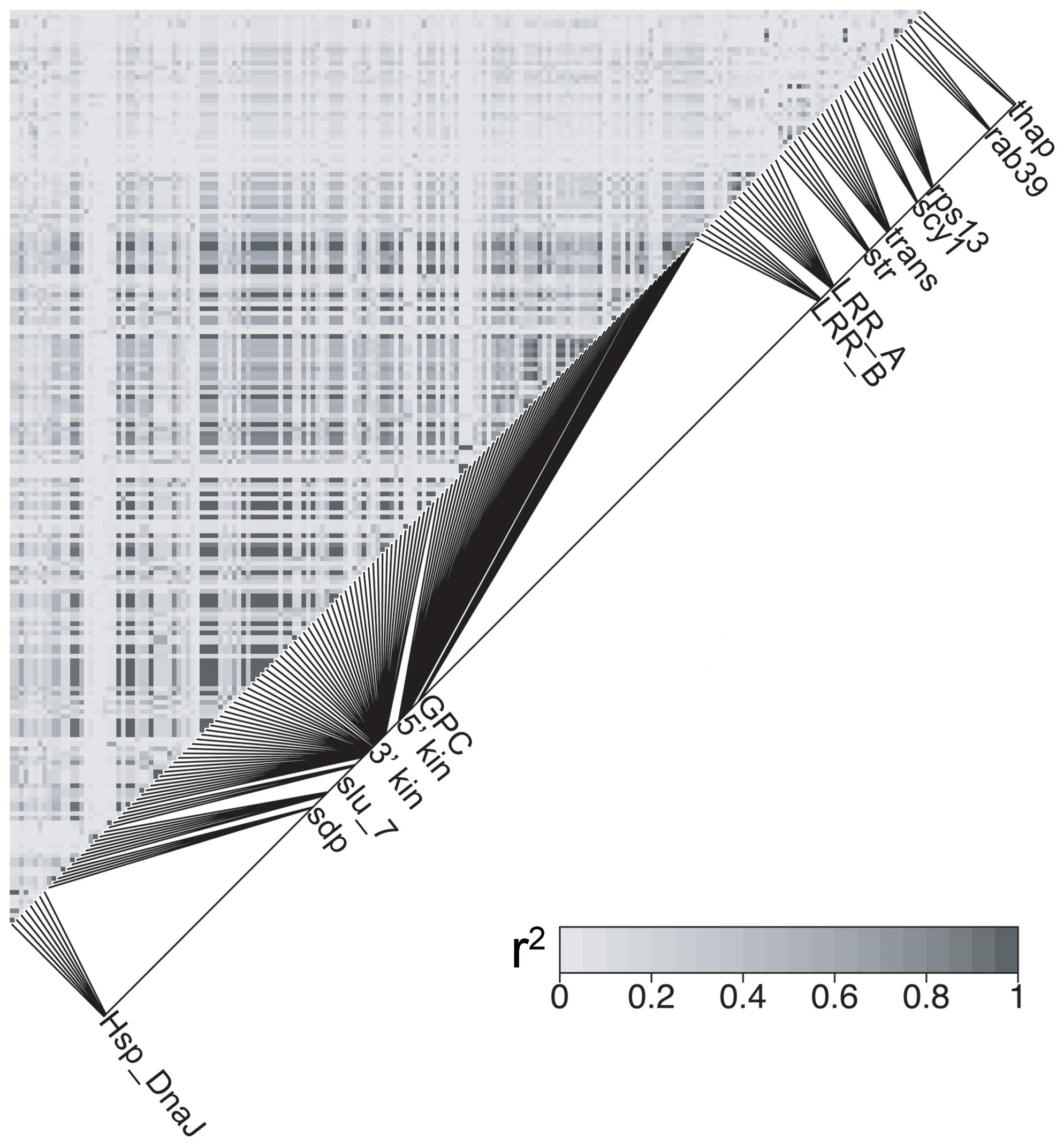 <i>HmB</i> linkage disequilibrium analysis.