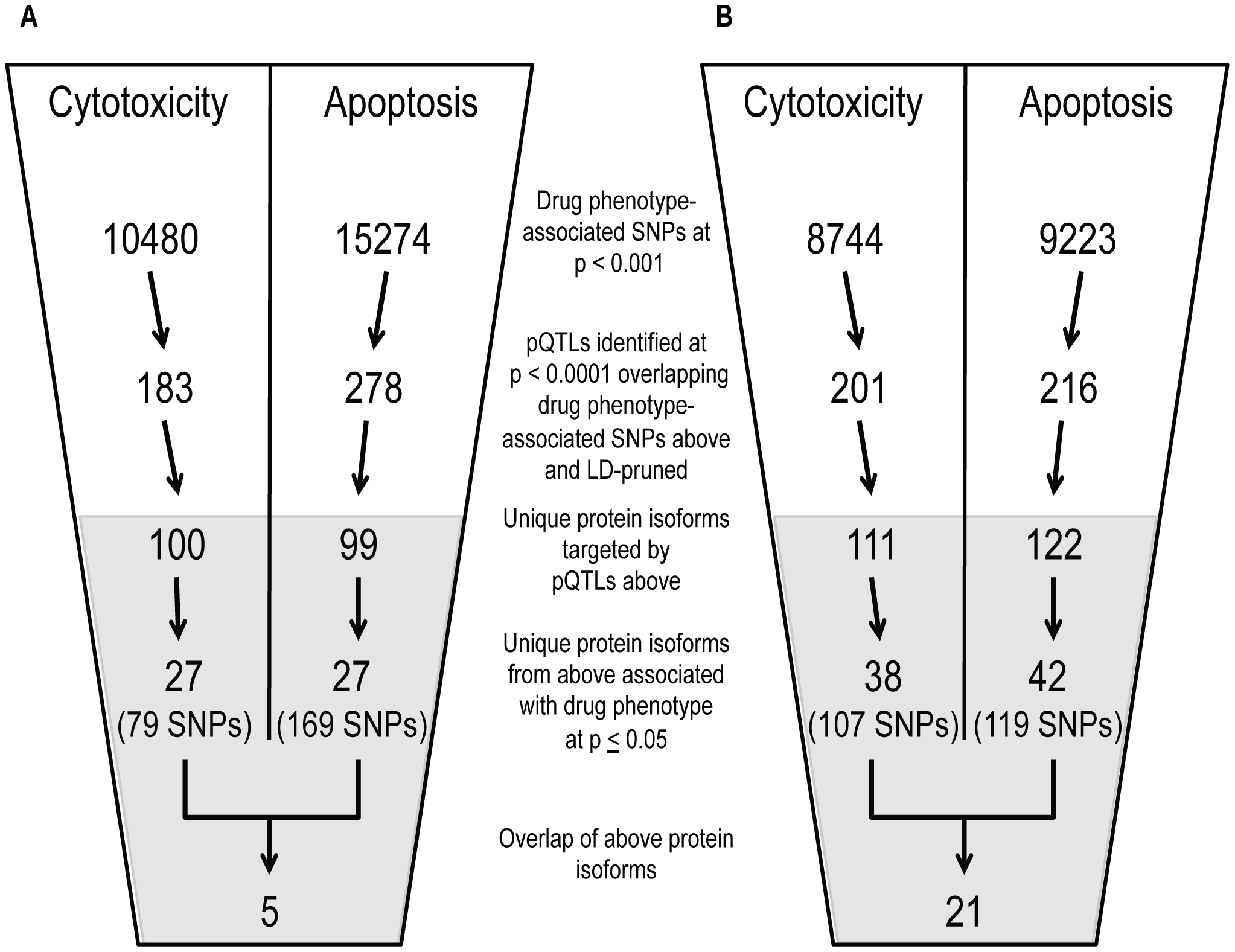 Identification of common proteins associated with differing phenotypes through independent pQTL signals for cisplatin and paclitaxel.