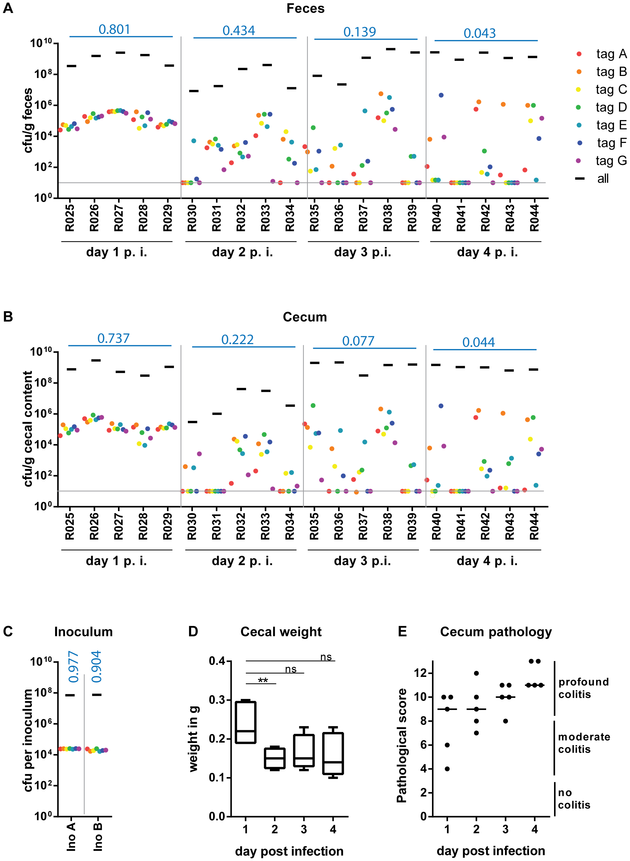 WITS infections reveal severe WITS diversity loss (=reduction in population evenness) during oral infection of C57BL/6 mice starting at day 2 p.i.