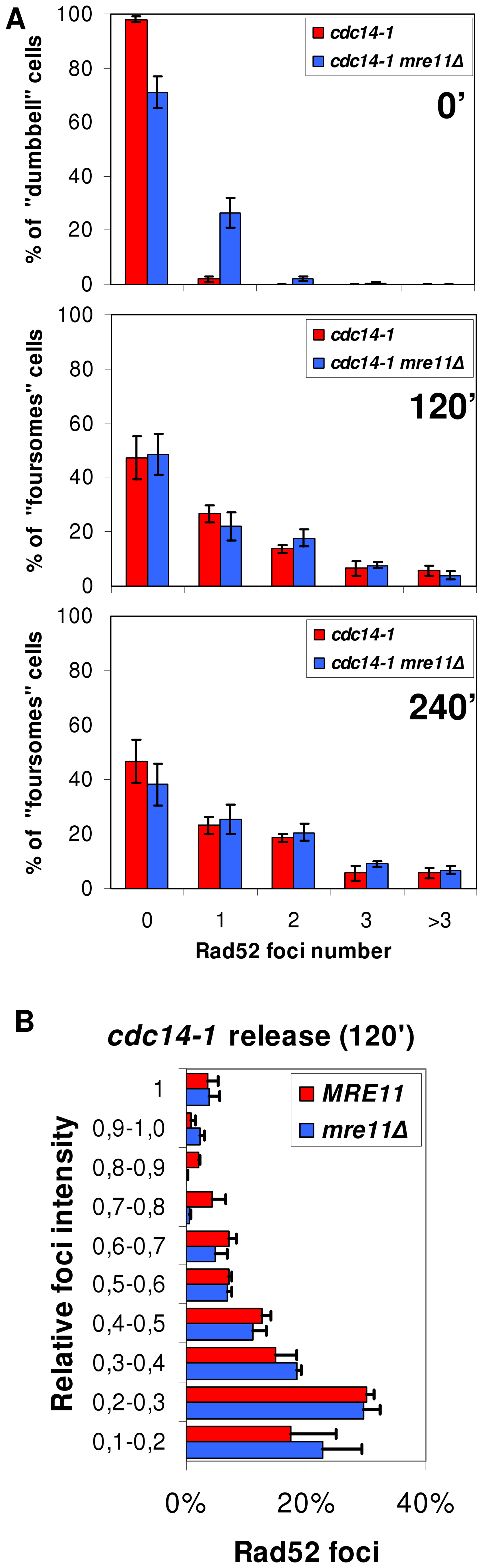 Accumulation of Rad52 foci after the <i>cdc14-1</i> release is independent on Mre11.