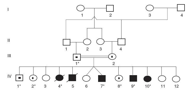 Rodokmeň rómskej rodiny s Criglerovým-Najjarovým syndrómom typu I. (* označuje členov rodiny, od ktorých sme získali DNA vzorky)