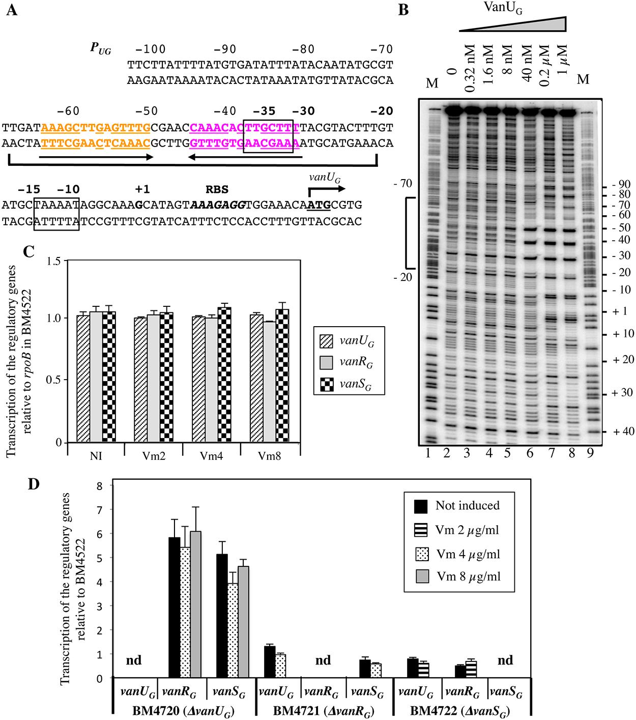 Binding sites of VanU<sub>G</sub> to the <i>P</i><sub><i>UG</i></sub> regulatory promoter (A, B) and regulatory genes transcription (C, D).