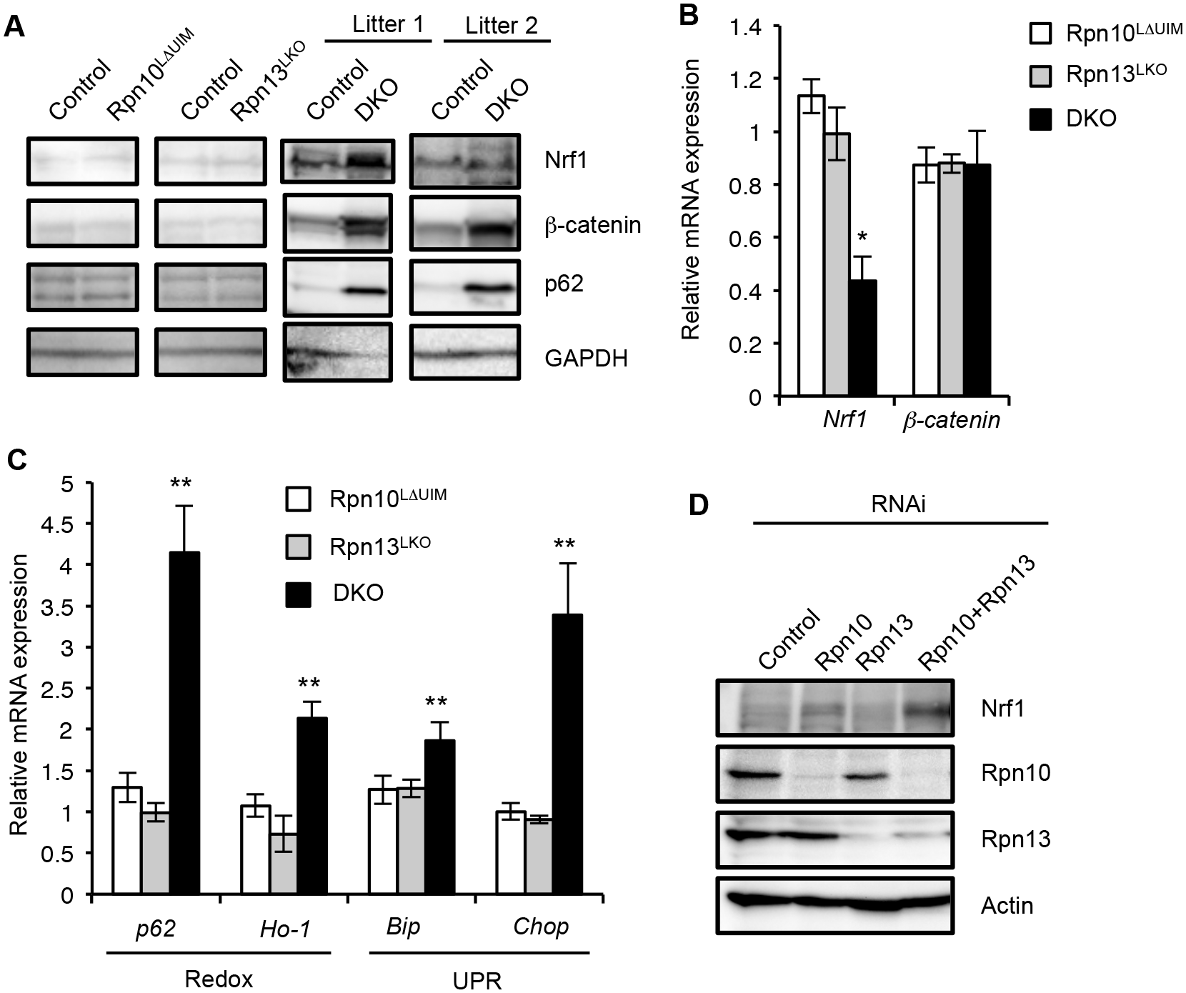 Synthetic effect of Rpn10-UIM and Rpn13 deletion on degradation of ubiquitinated proteins and cellular stress.