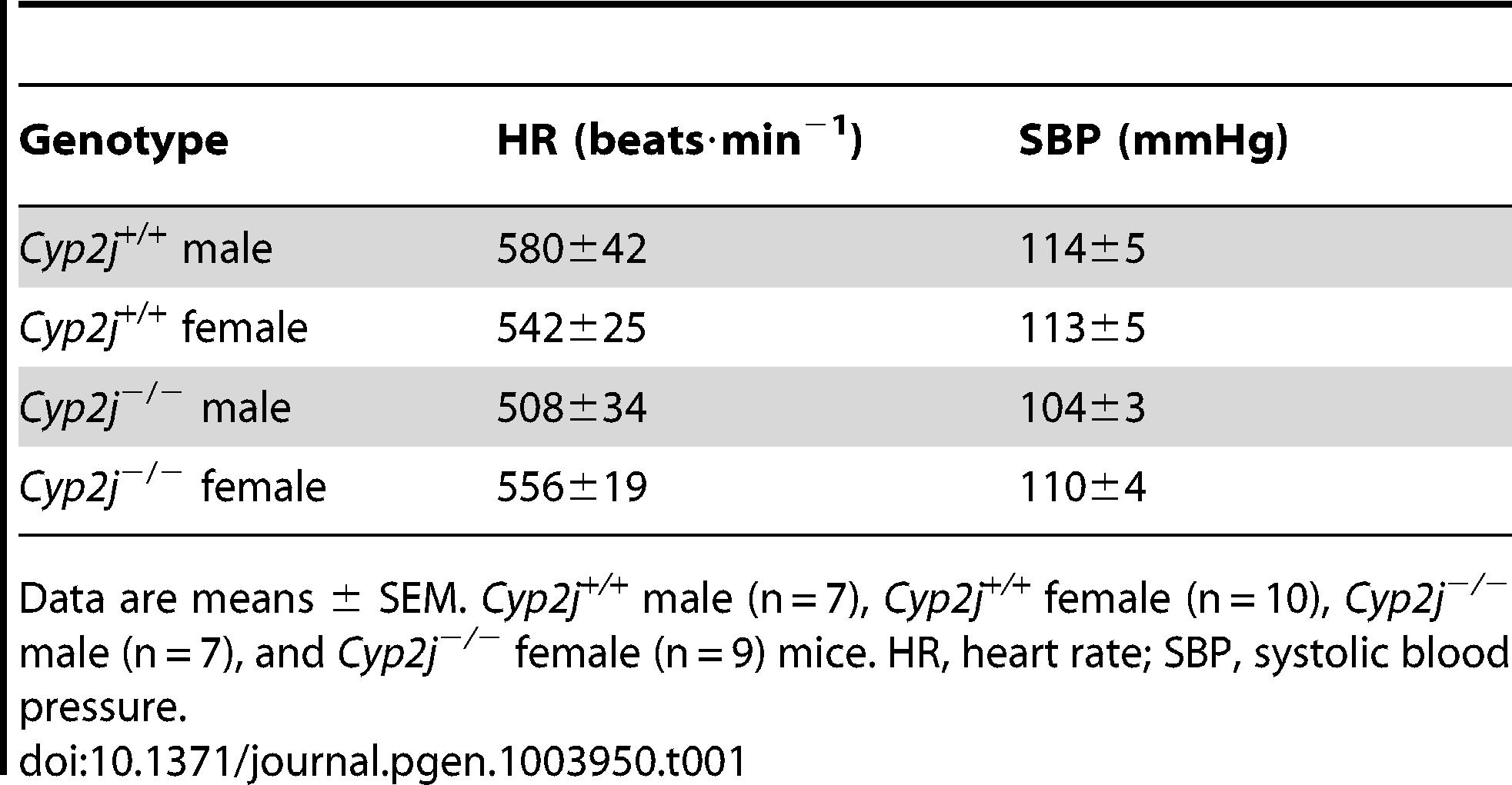 Comparison of systemic hemodynamic measurements in conscious <i>Cyp2j<sup>+/+</sup></i> and <i>Cyp2j<sup>−/−</sup></i> mice.